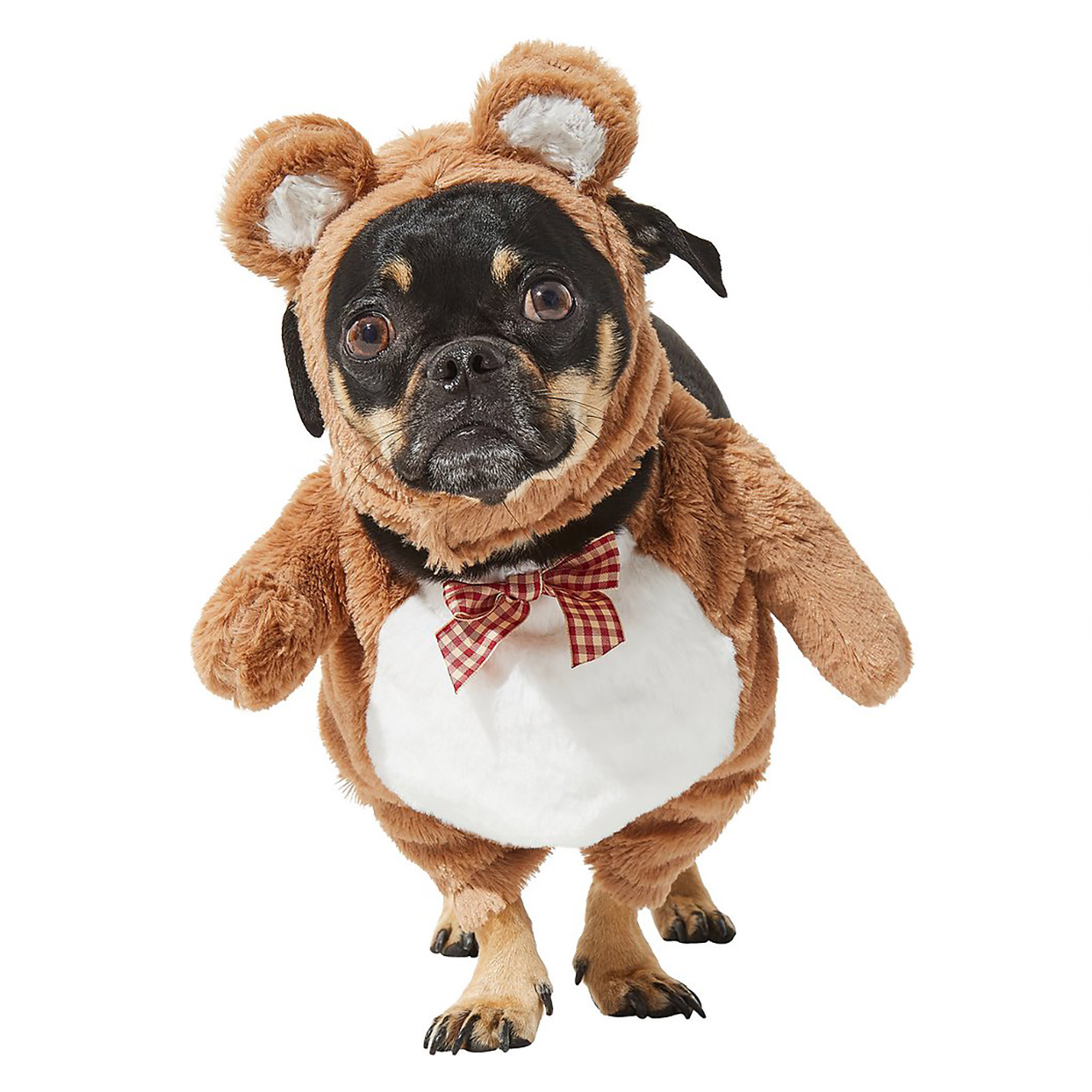 Dog wearing the Front Walking Teddy Bear Dog & Cat Costume on a white background