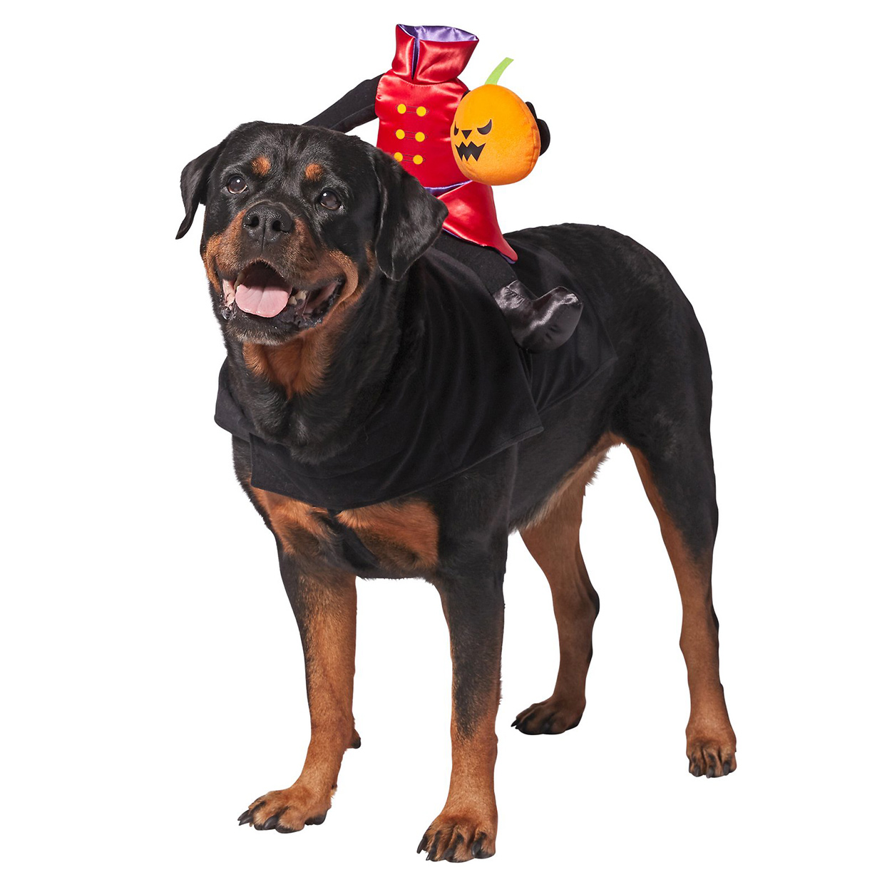 Dog wearing the Headless Rider Dog & Cat Costume on a white background
