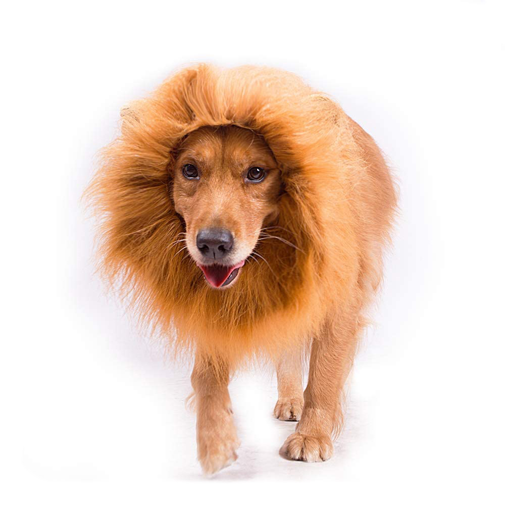 Dog wearing the Lion Mane Costume for Dogs on a white background