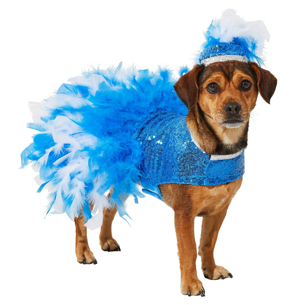 Dog wearing the Showgirl Dog & Cat Halloween Costume on a white background