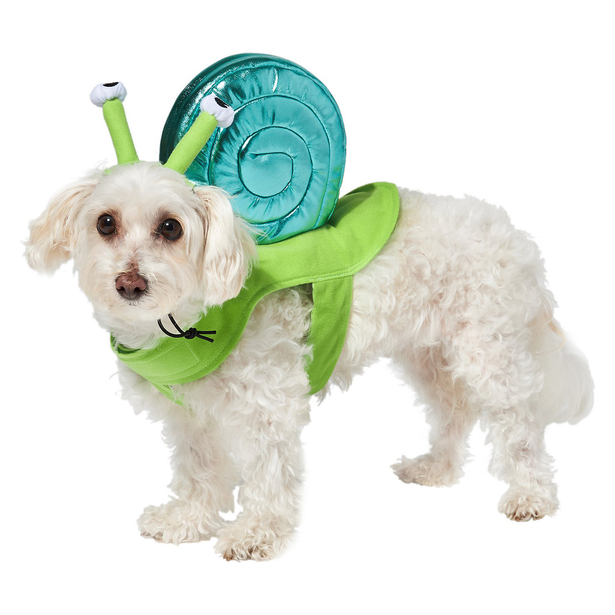 Dog wearing the Snail Dog & Cat Halloween Costume on a white background