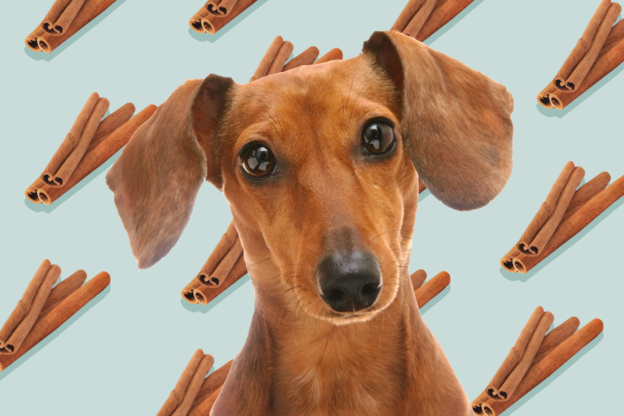 cute dog with cinnamon graphic background