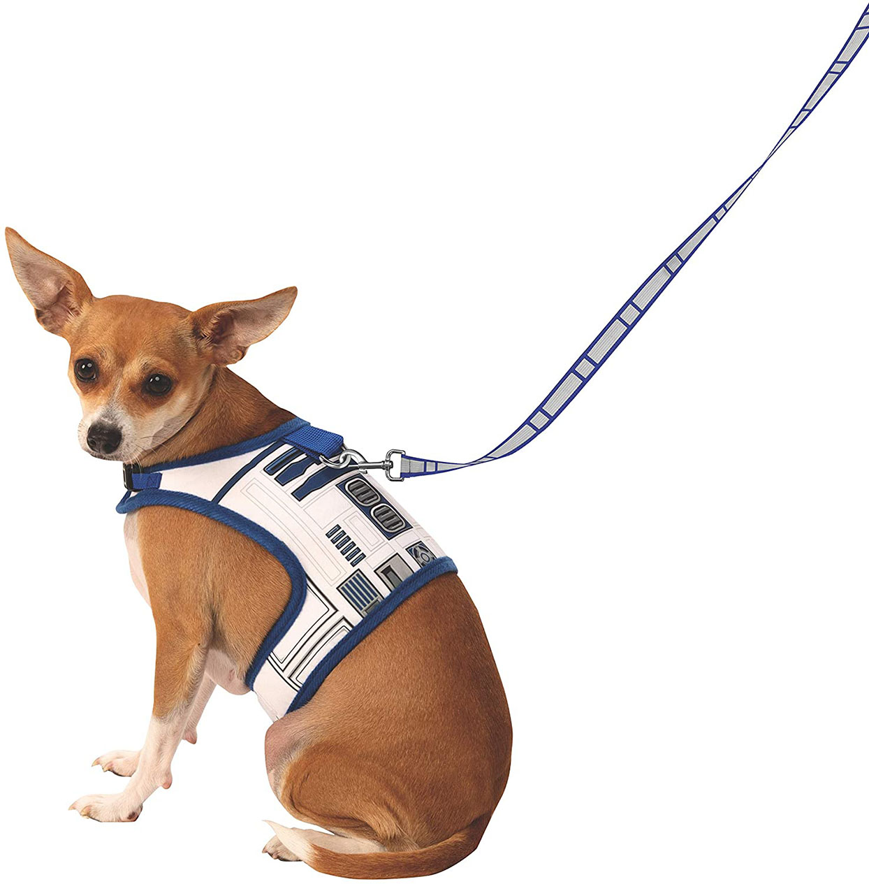 Chihuahua wearing a R2D2 Star Wars dog leash and harness