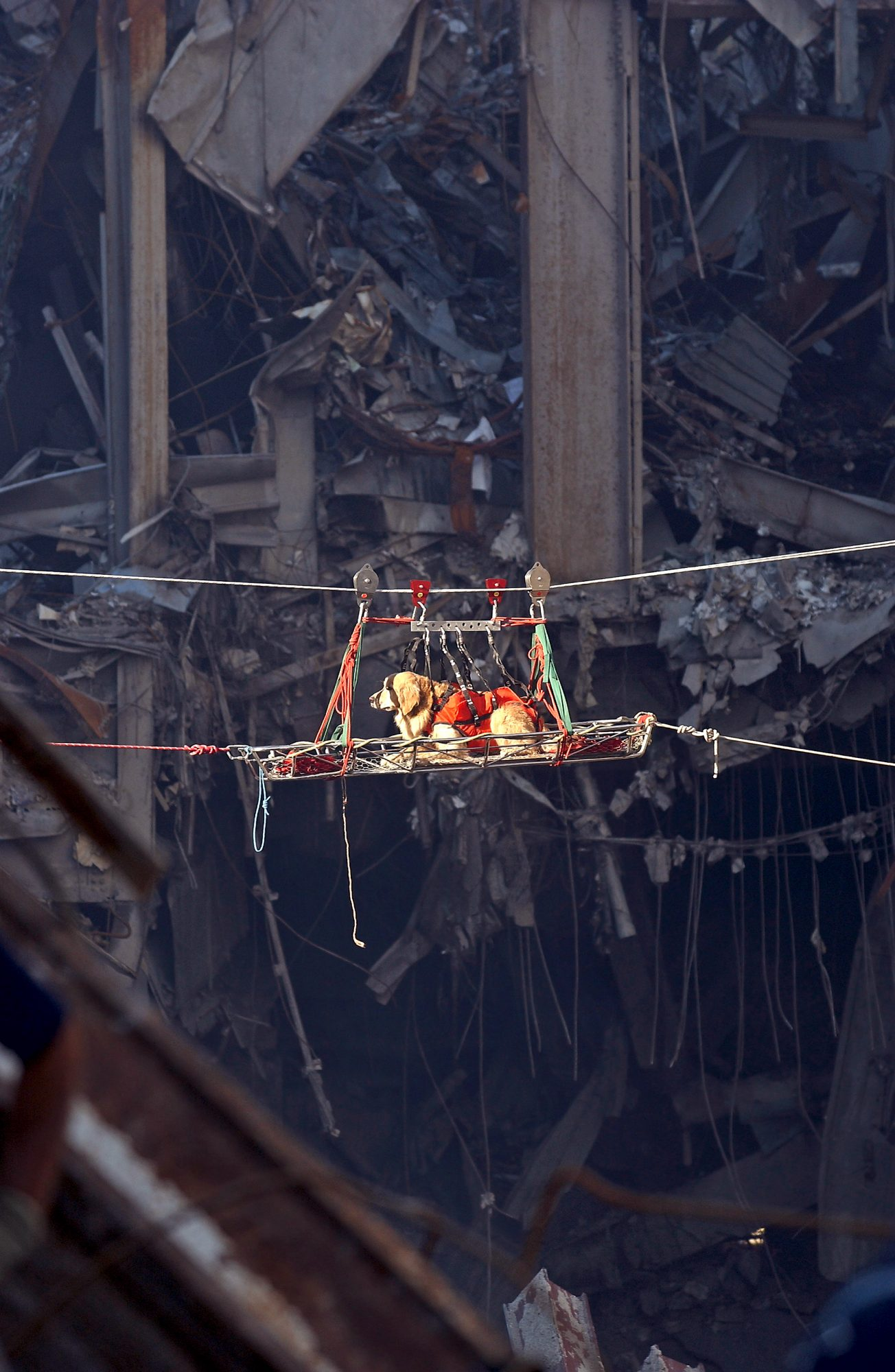 9/11 rescue Dog transported out of the debris of the World Trade Center.