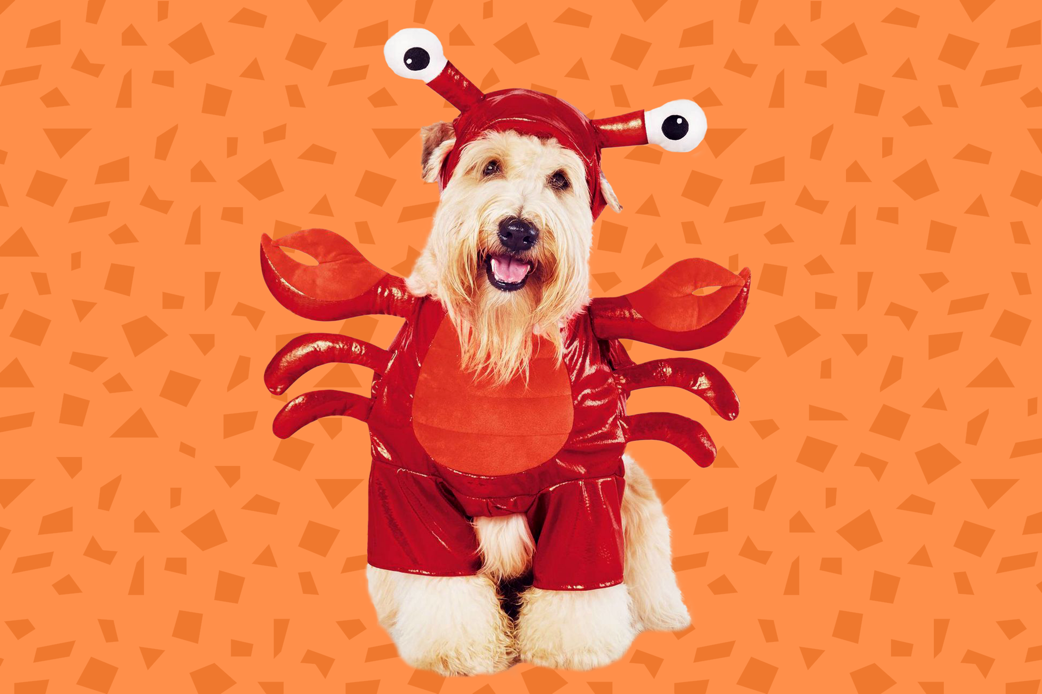 best halloween dog costume, a red lobster