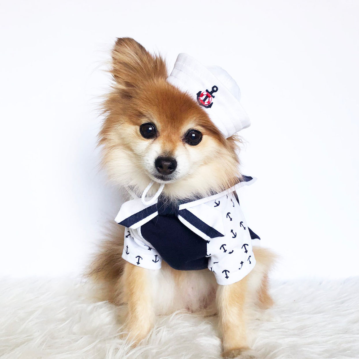 Pomeranian wearing a sailor hat and cape costume