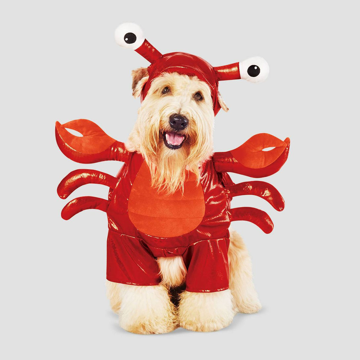 Dog in a red lobster costume