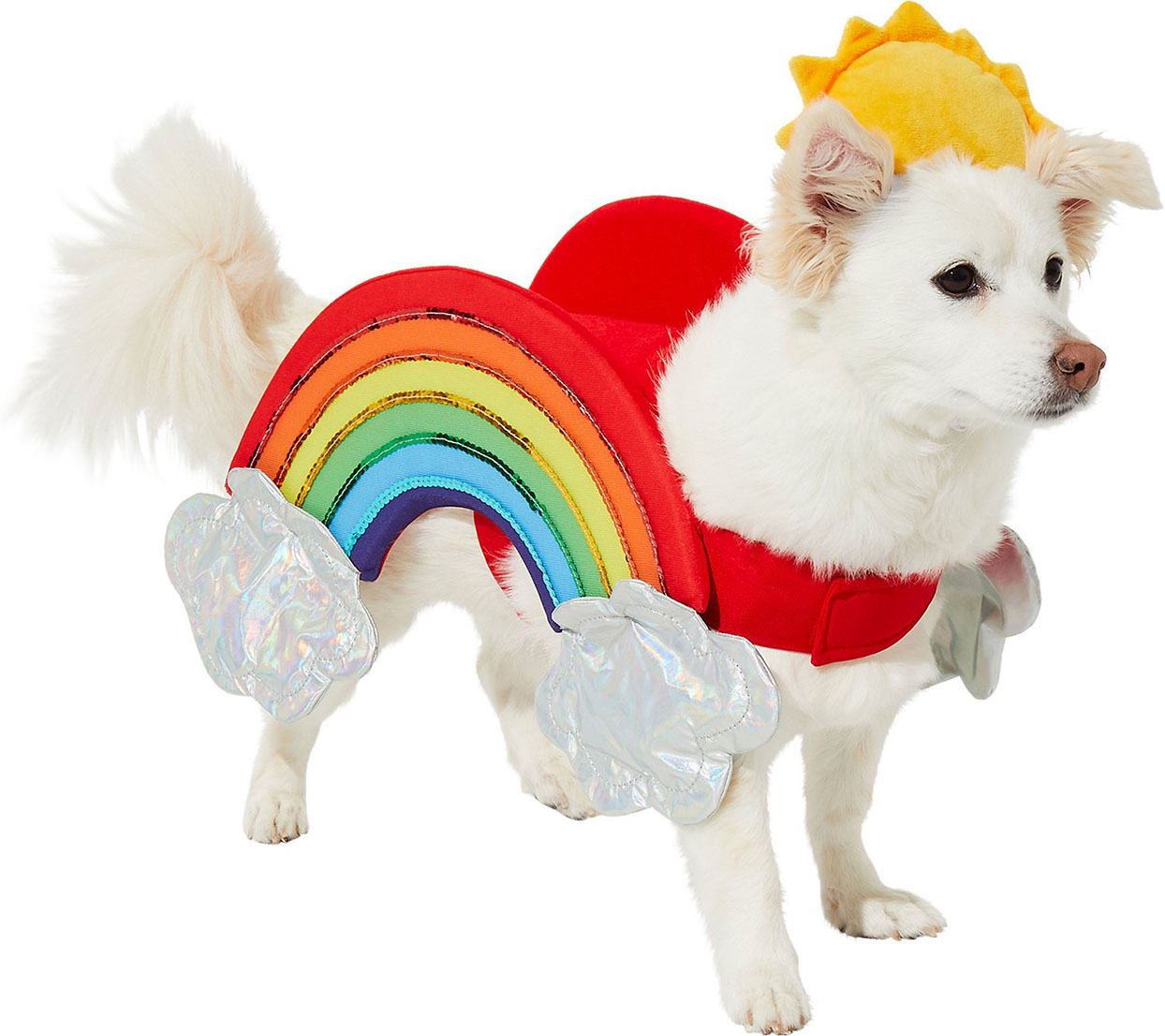 White dog wearing a rainbow Halloween costume with a sun hat