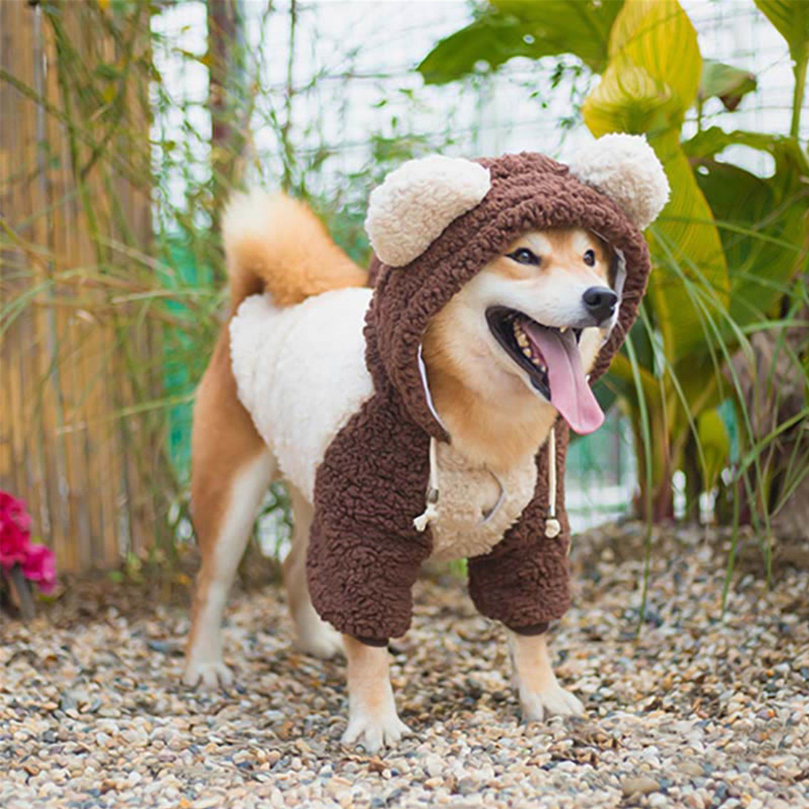 Dog wearing a Bear Dog Coat Jacket while standing outdoors