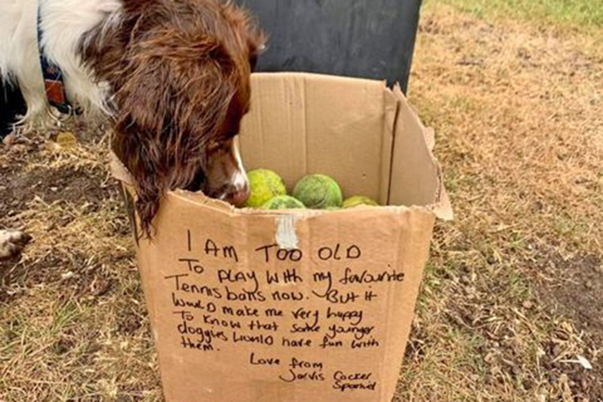 dog with large box of tennis balls