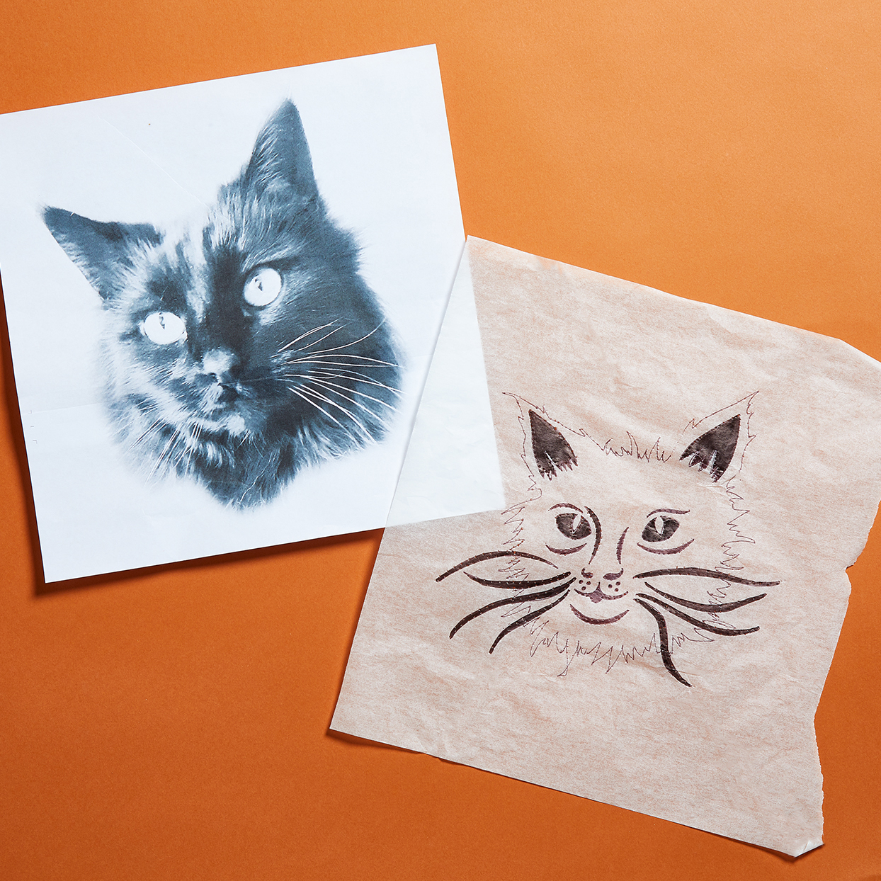 Cat drawing traced on tracing paper for a pumpkin carving on an orange background