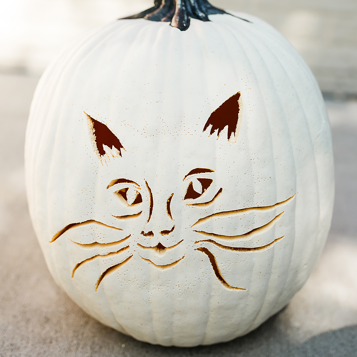 white pumpkin carving of a cat halfway done with carving and pinpoints