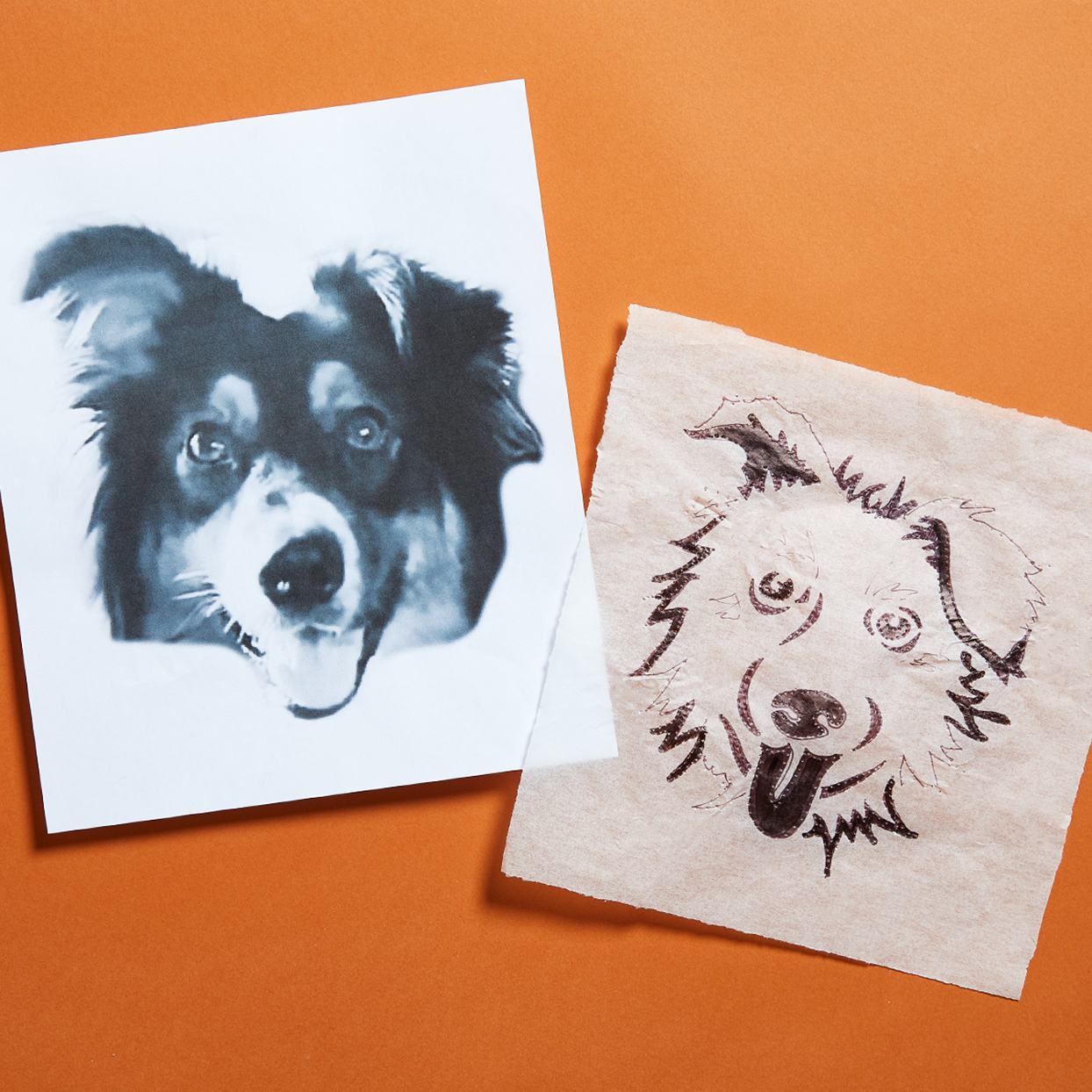 Dog drawing traced on tracing paper for a pumpkin carving lying on an orange background