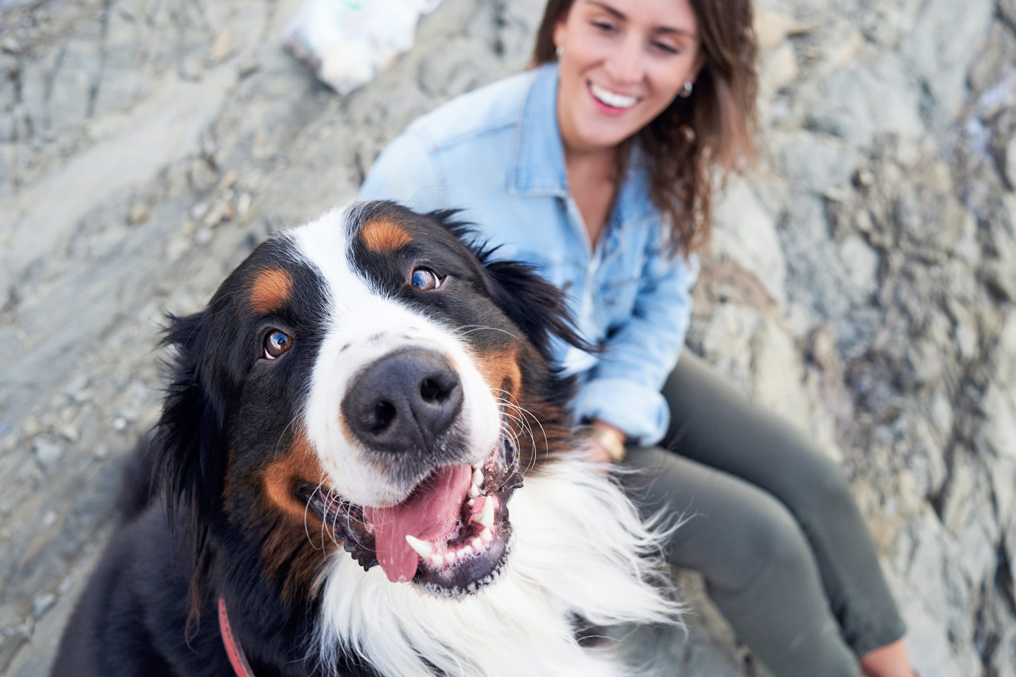 bernese mountain dog smiling at the camera sitting with woman on rocks