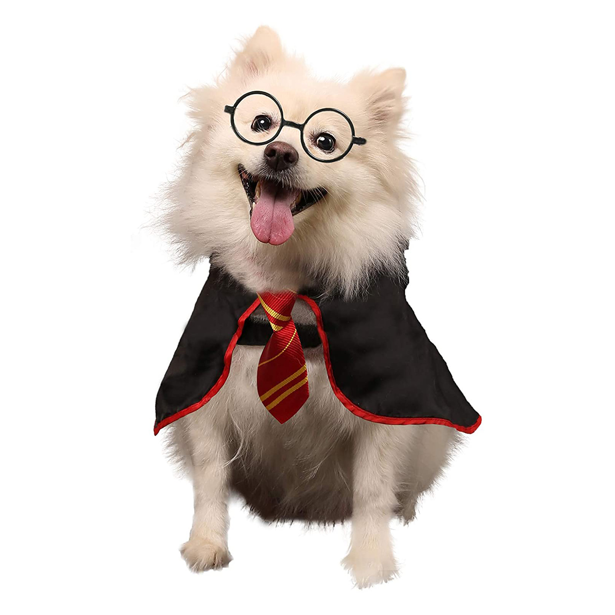 Dog wearing a Coomour Halloween Dog Pet Wizard Costume on a white background
