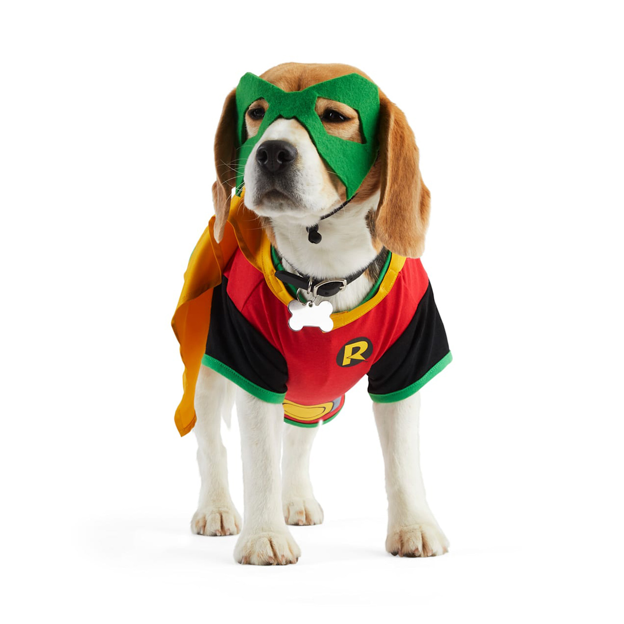 Dog wearing a DC Comics Robin Pet Costume on a white background