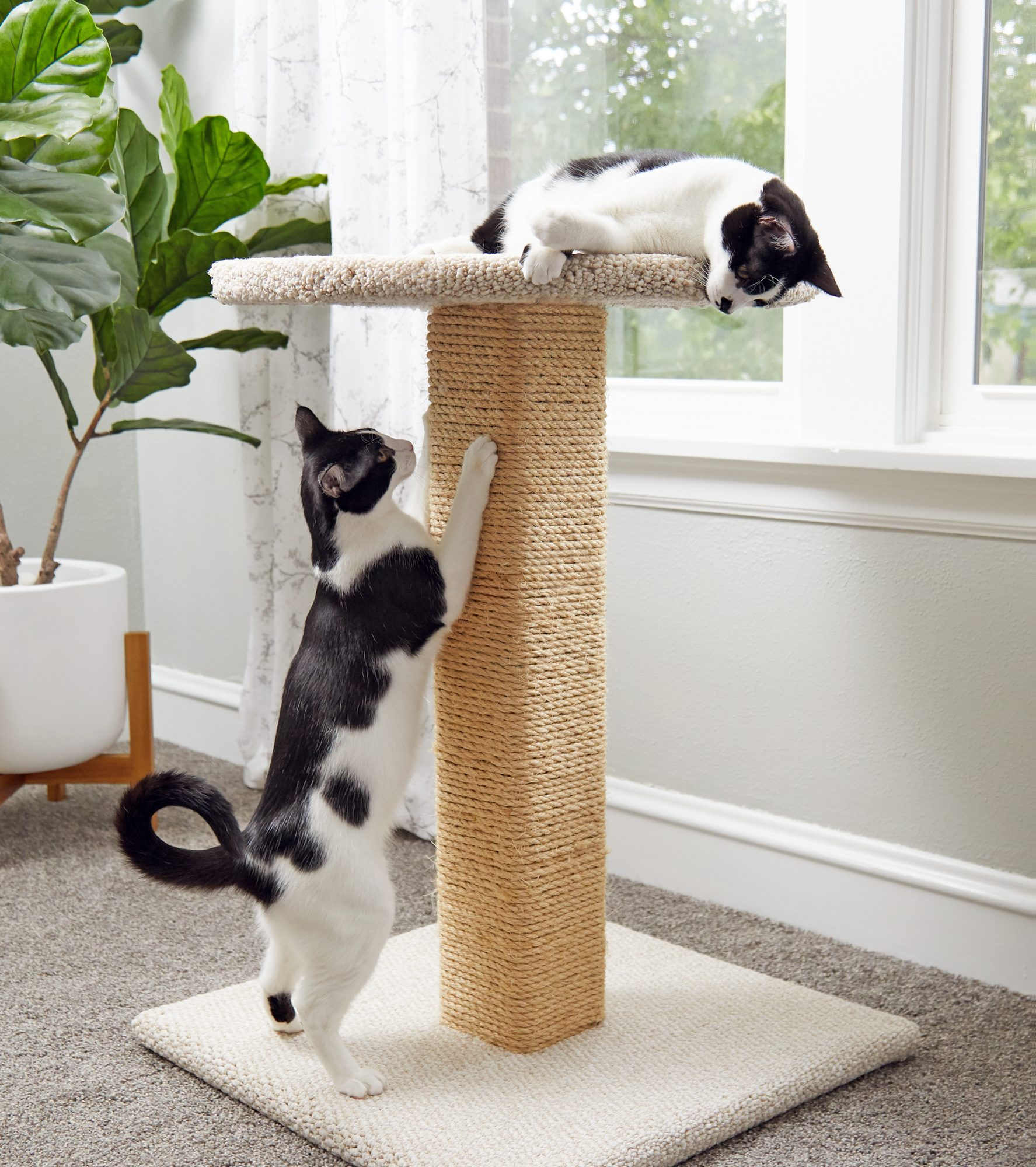 two cats lounging and playing on a DIY cat scratcher next to a window in their home