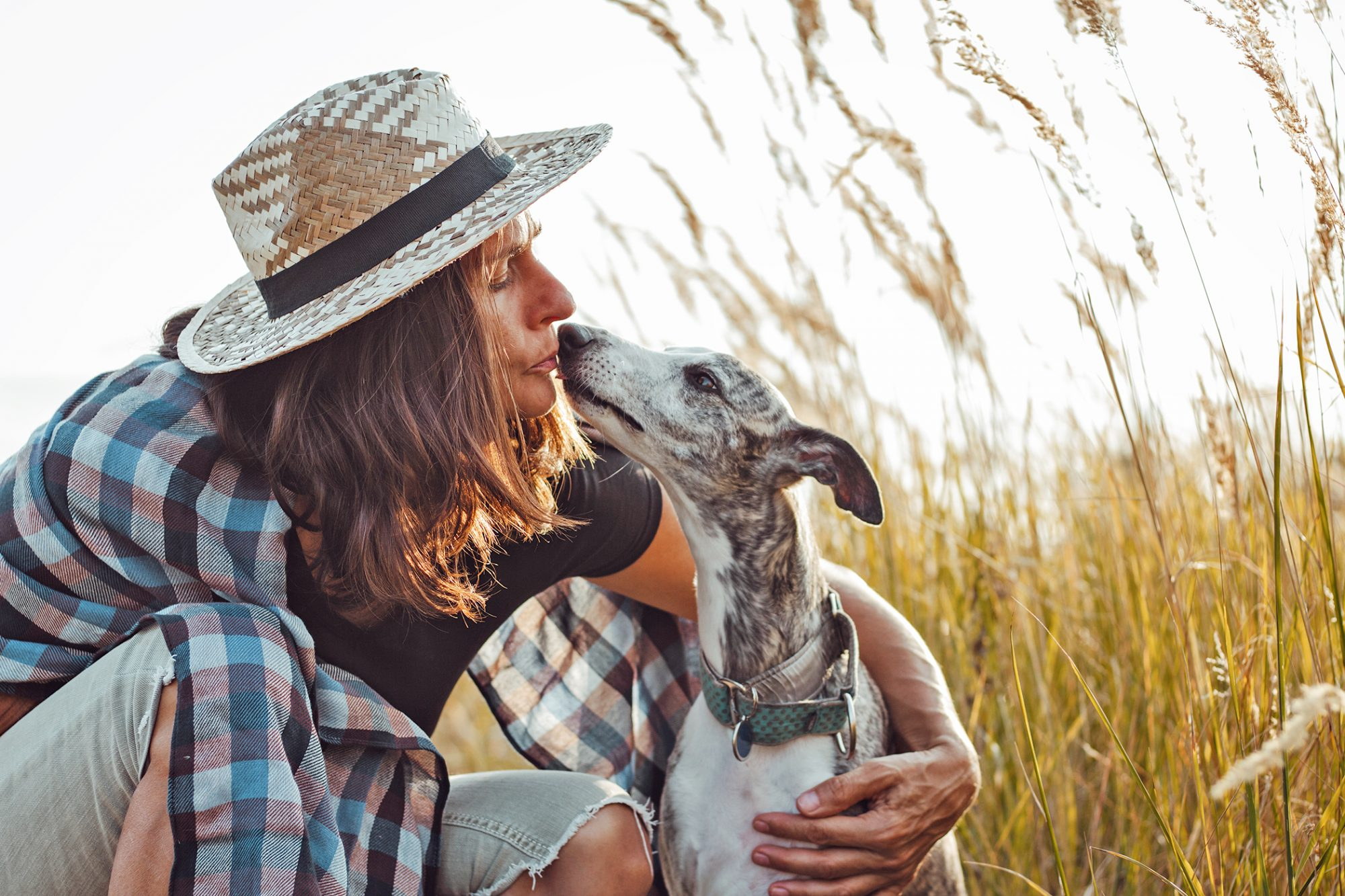 woman sitting in a field kissing her whippet dog