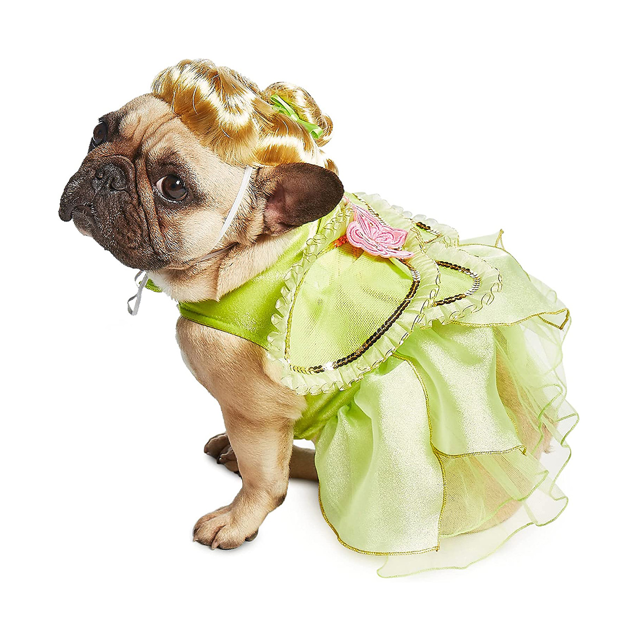 Dog wearing a Disney Tinker Belle Costume on a white background
