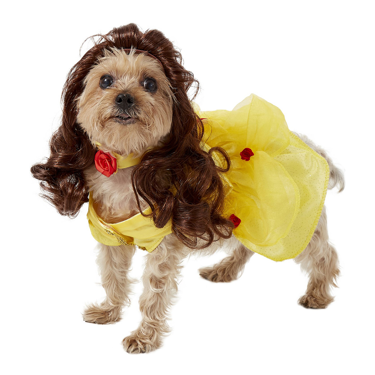 Dog wearing a Rubie's Costume Company Belle Disney Princess Costume on a white background