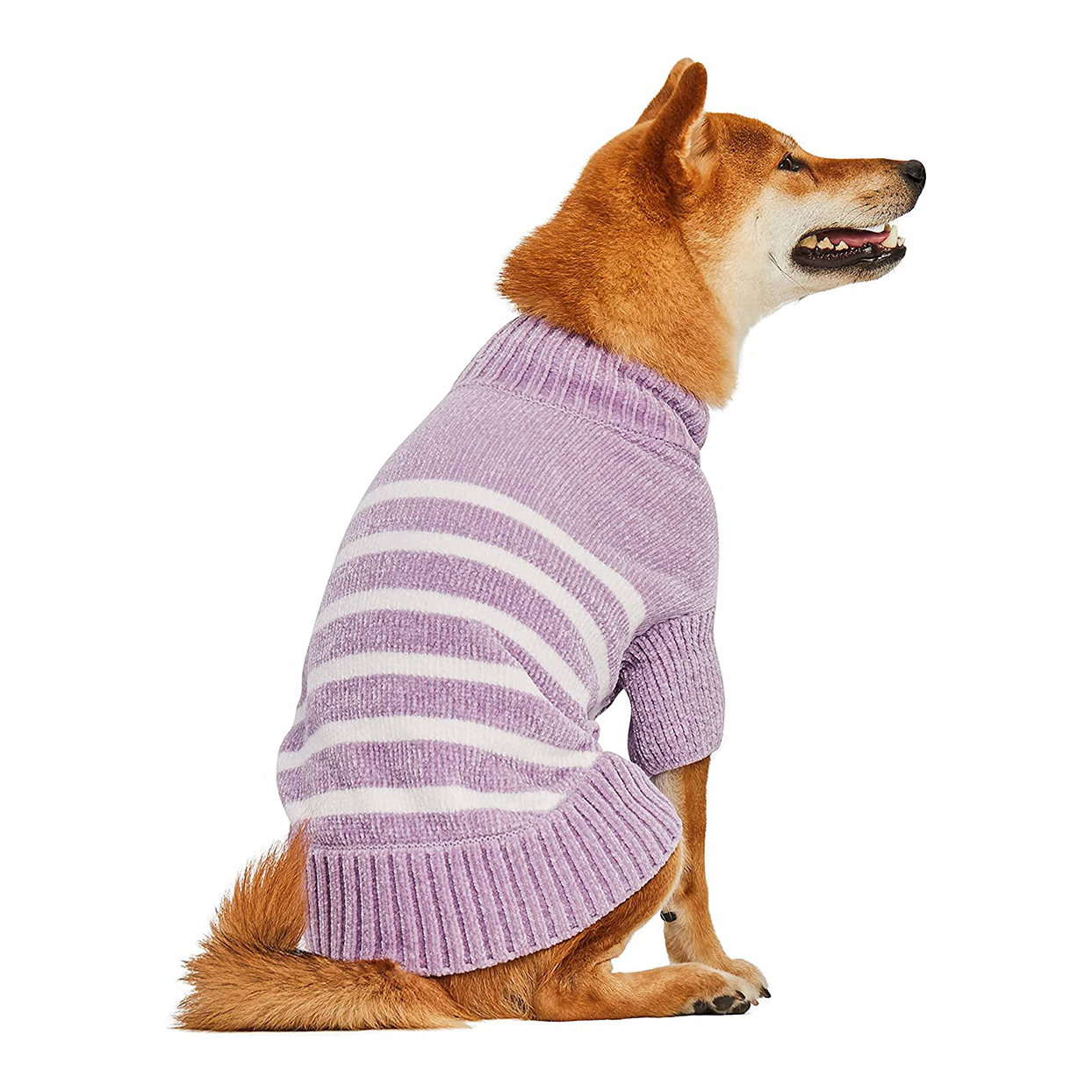 Dog wearing a Blueberry Pet Chenille Sweater on a white background
