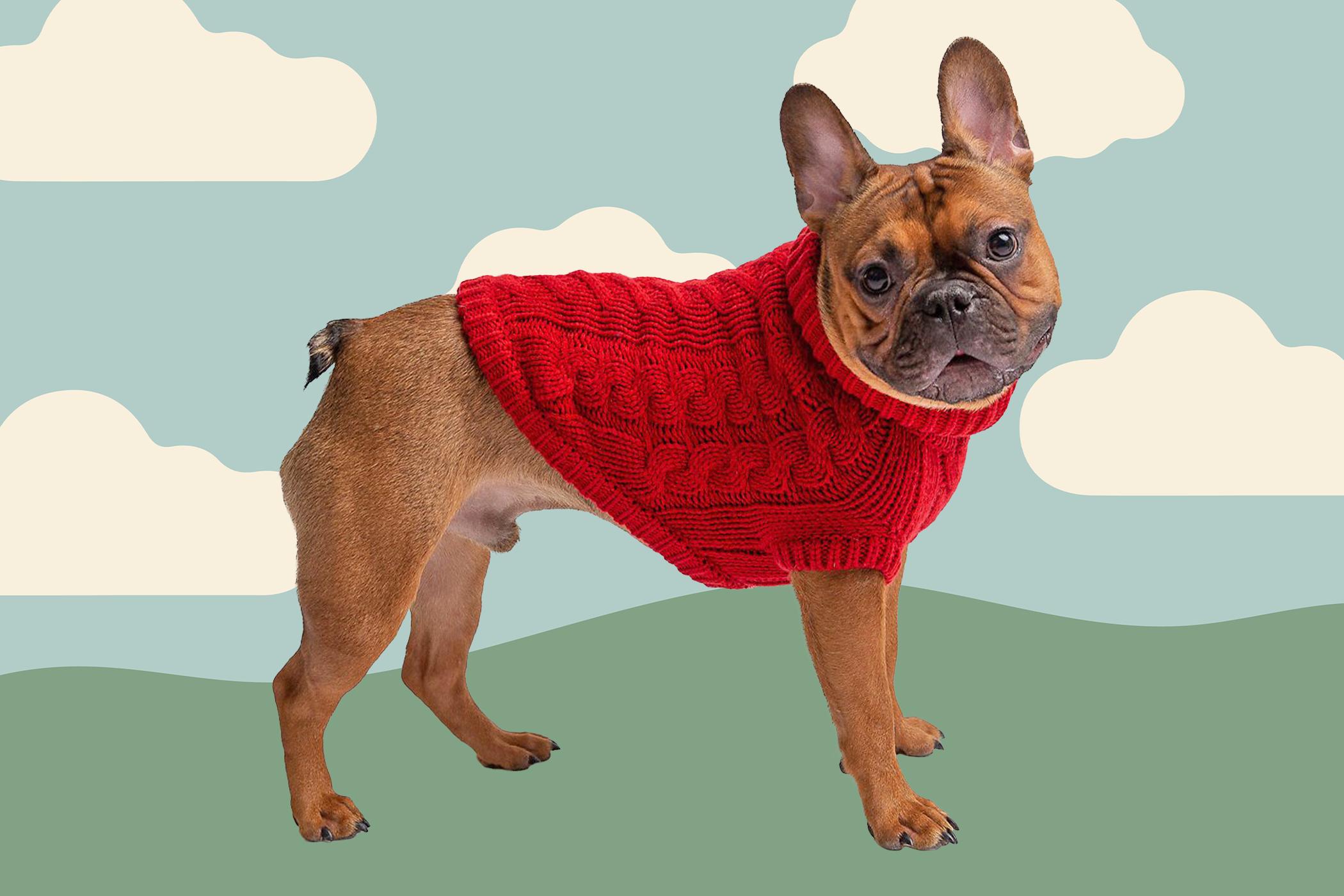 dog wearing red sweater on a illustrated background with clouds and grass