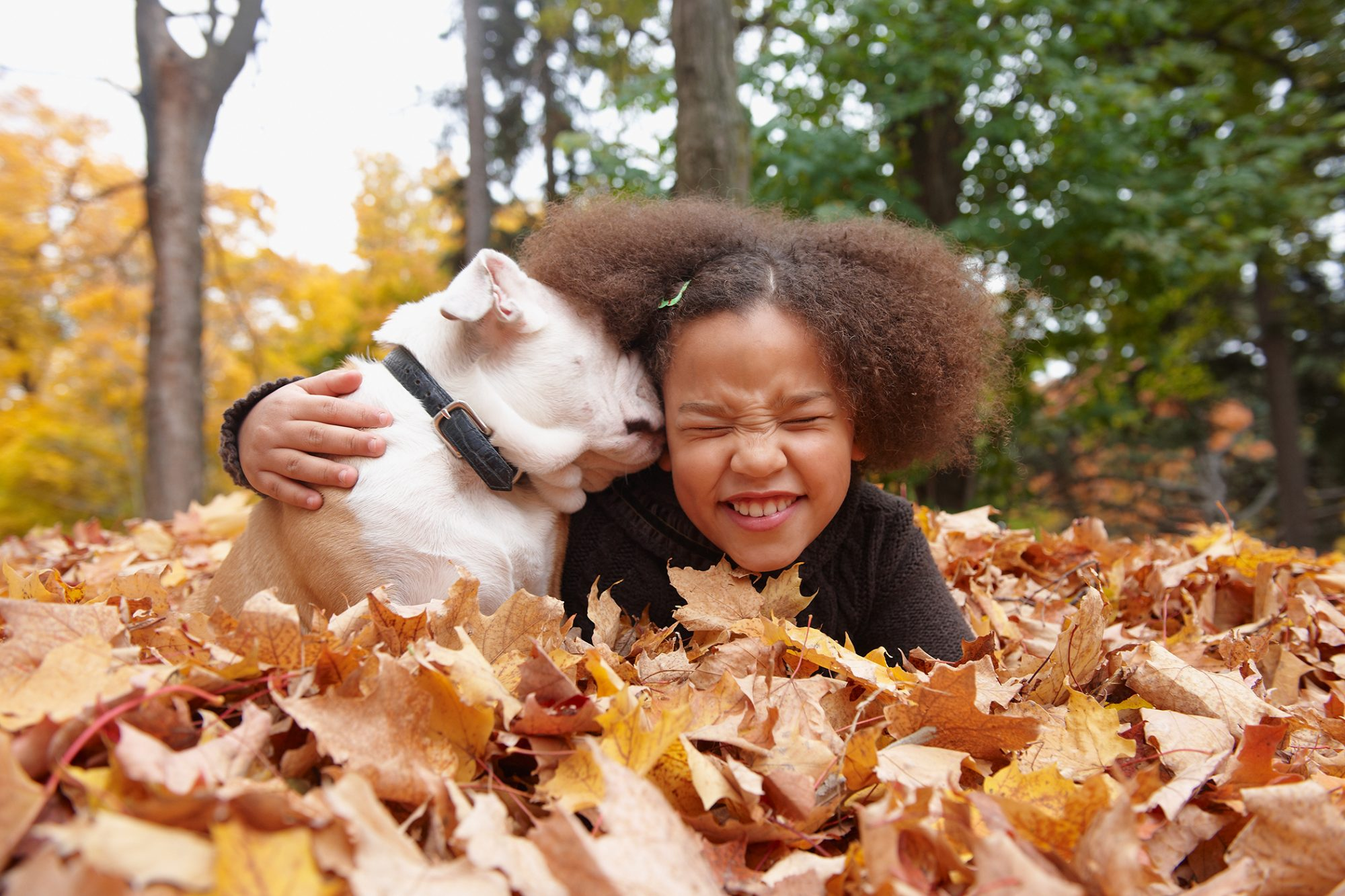 dog lying in autumn leaves kissing a child on the cheek