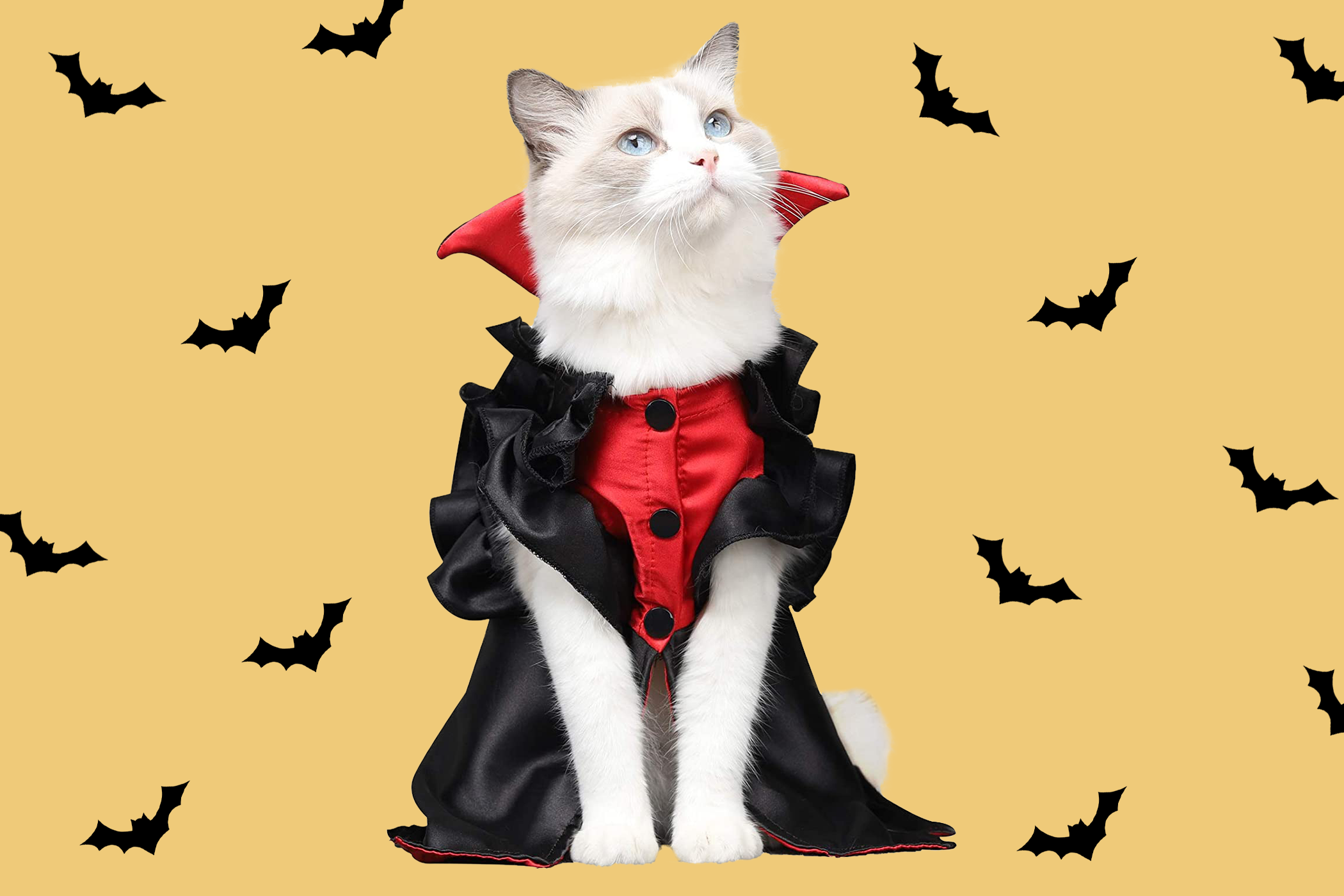 white cat in a vampire cat halloween costume on a yellow bat background
