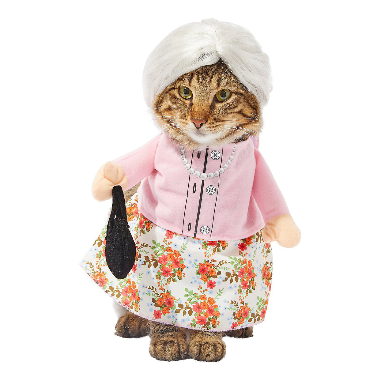 Cat wearing a Frisco Front Walking Granny Dog & Cat Costume on on a white background