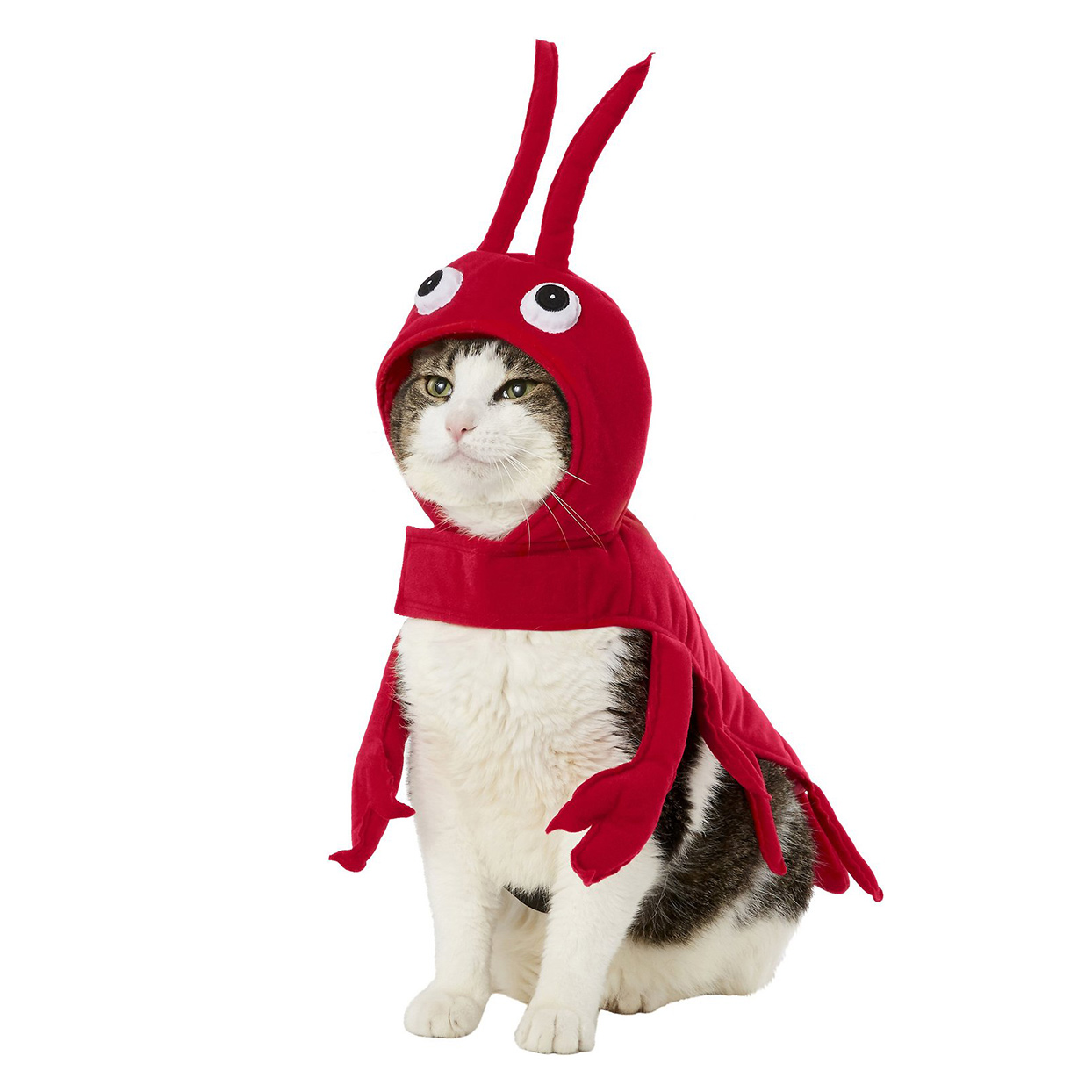 Cat wearing a Frisco Red Lobster Dog & Cat Costume on a white background