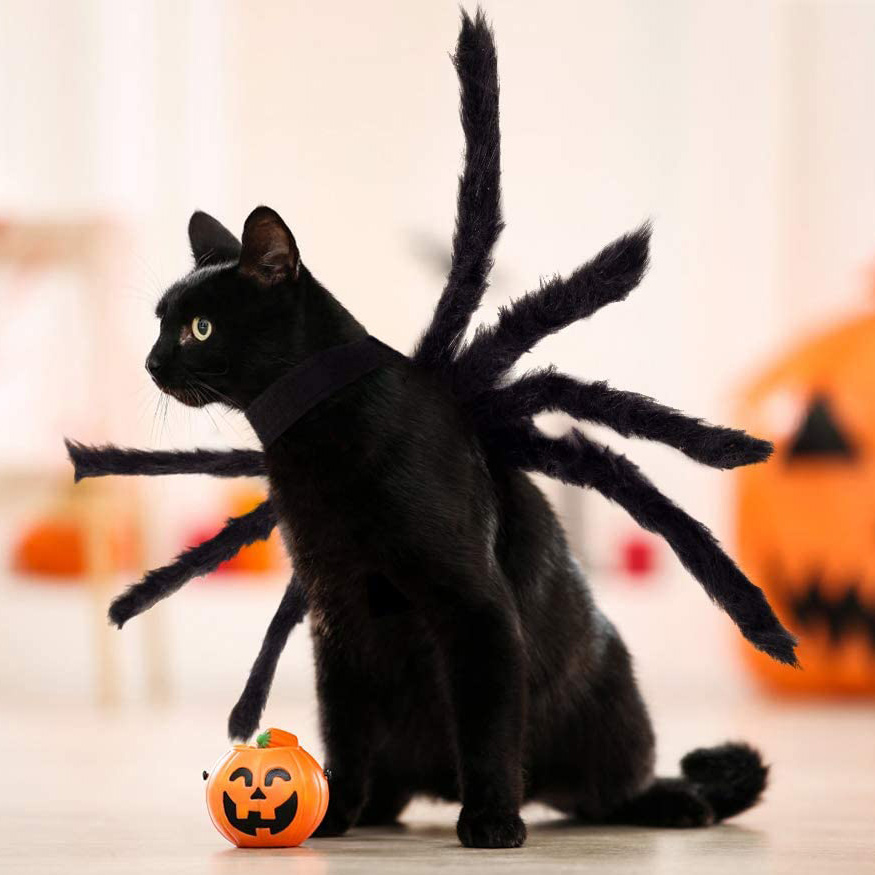 Cat wearing a Halloween Spider Costume for Dog and Cat on a white background