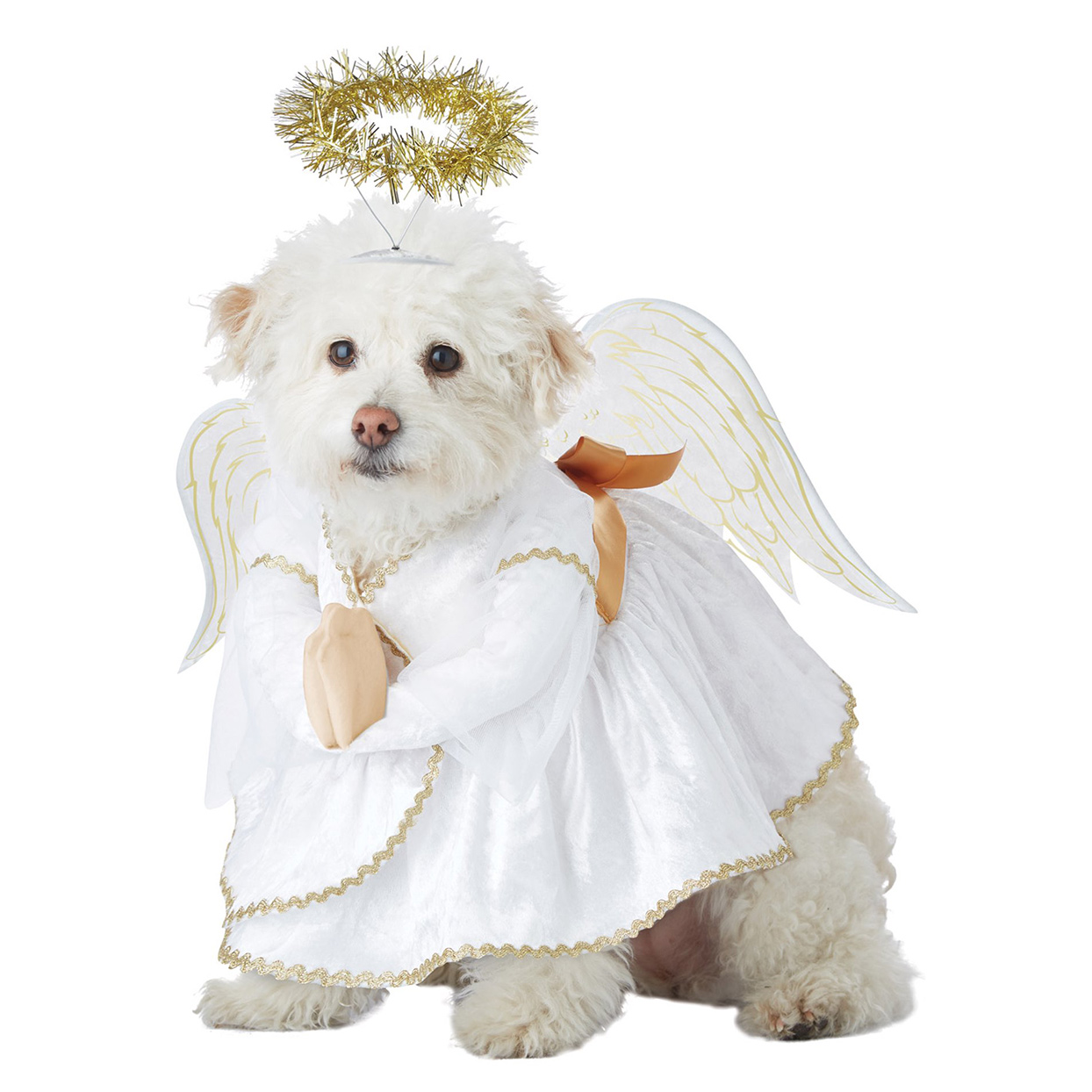 Dog wearing a Heavenly Hound Pet Costume on a white background