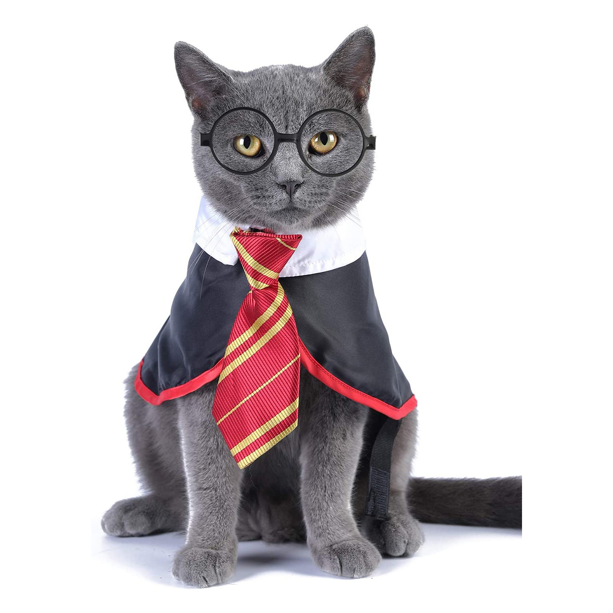 Cat wearing a Impoosy Cat Halloween Costume on a white background