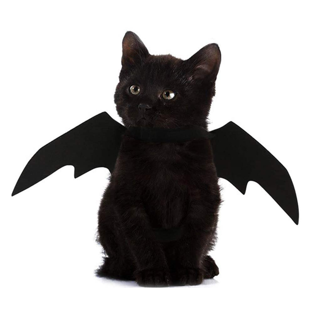 Cat wearing a Pet Cat Bat Wings for Halloween Costume on a white background