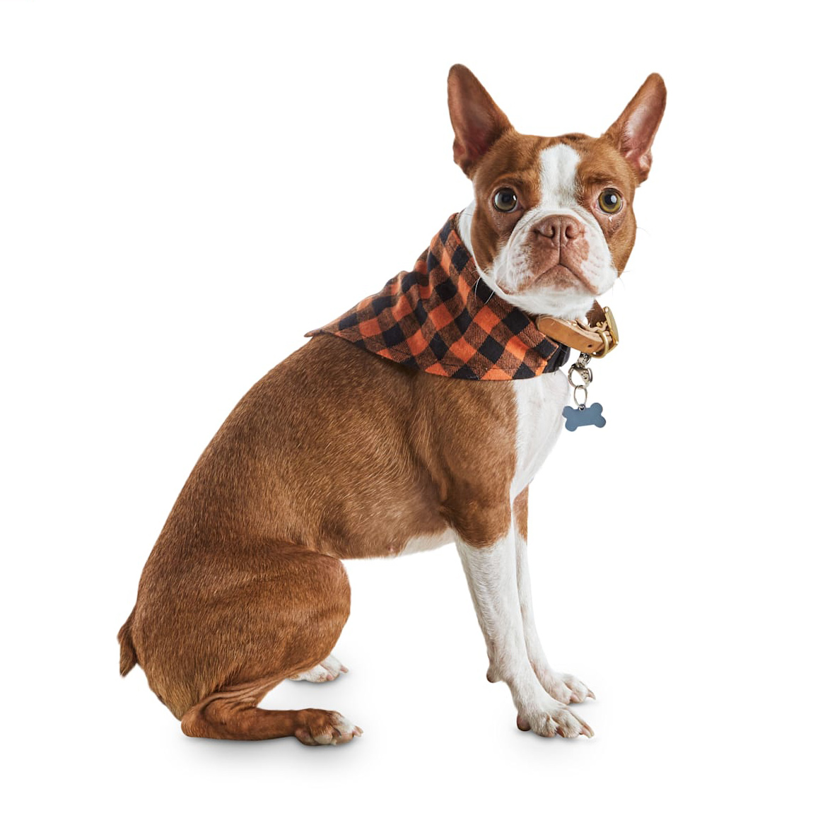 Dog wearing a Bootique Fall Kerchief Bandana on a white background