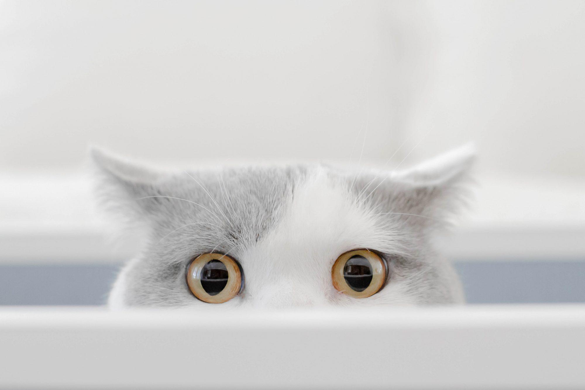 cat with wide eyes peeking over an edge
