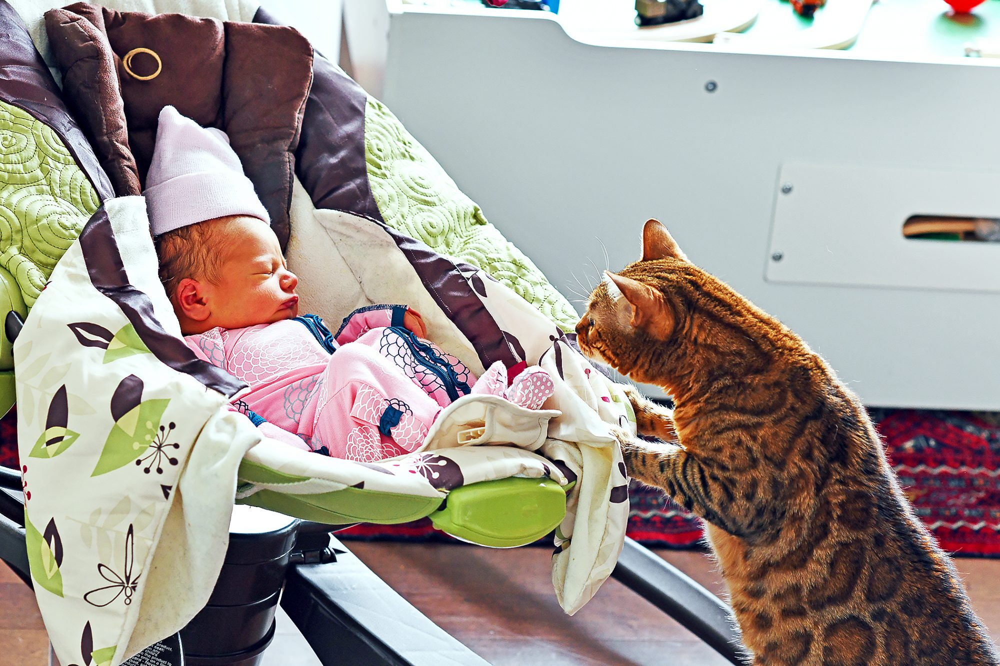 bengal cat staring at a baby sleeping in her swing