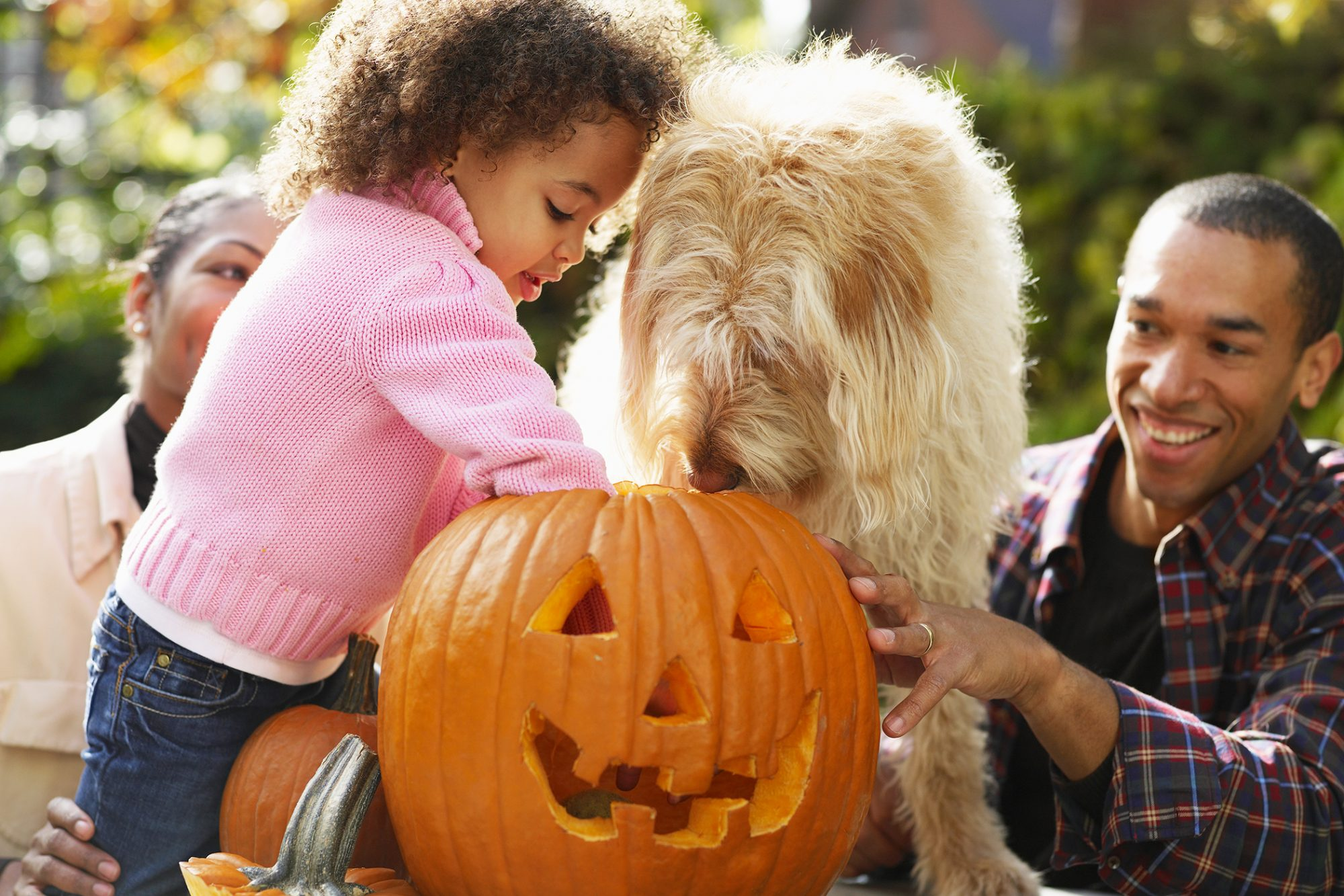 family carving a pumpkin on halloween with their dog