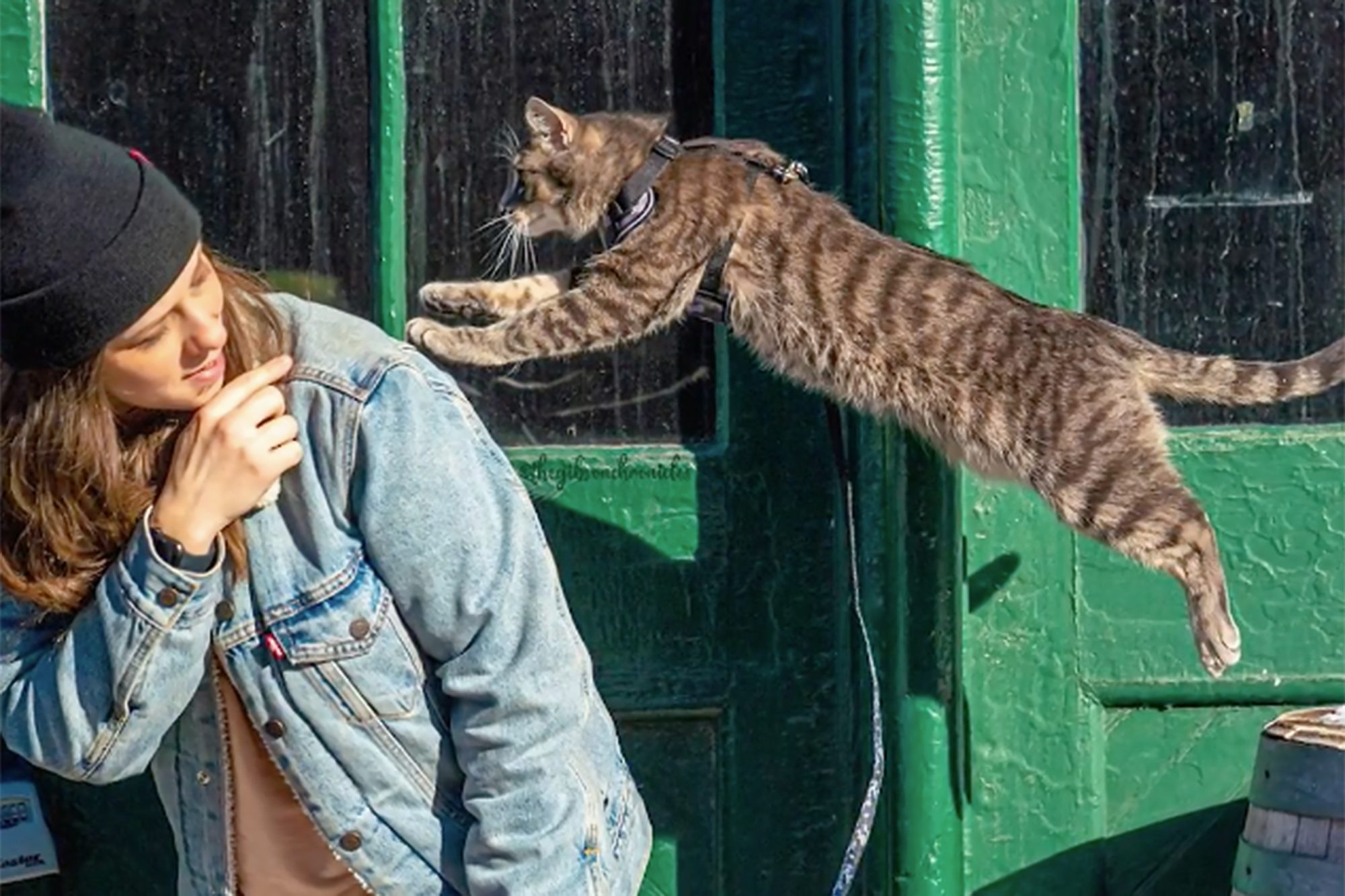 Gibson the cat jumping to his owner Sarah Klassen outside in front of a green door