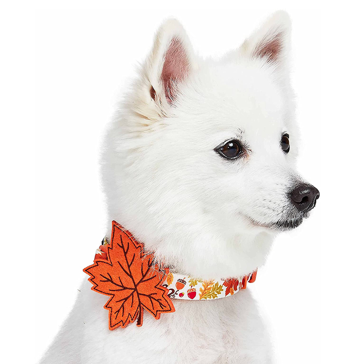 Dog wearing a Blueberry Pet Leaf Collar on a white background