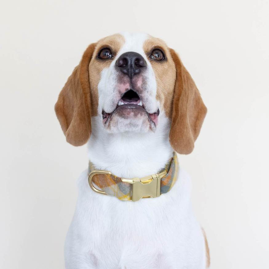 Dog wearing a Harvest Plaid Flannel Dog Collar on a off-white background