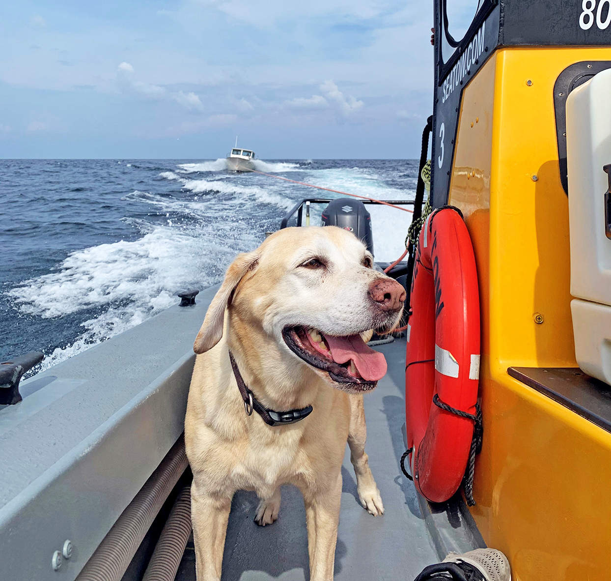 Tuna, the dog, on deck of a Sea Tow boat with another boat following in the wake