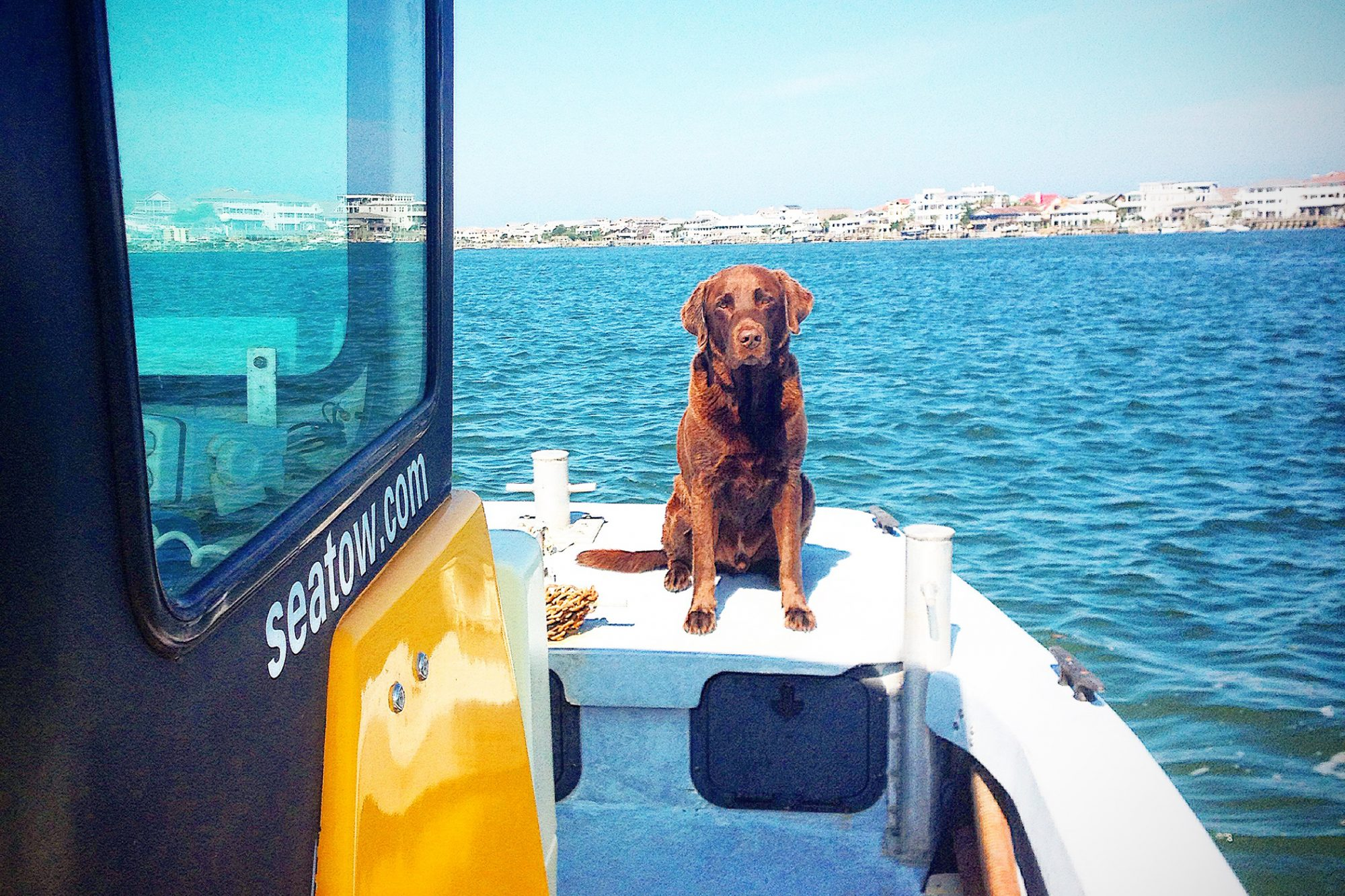 dog on Sea Tow boat with Wrightsville Beach in the backgound