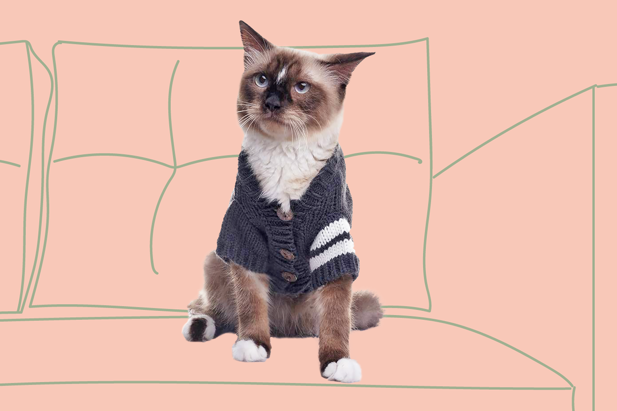 Cat wearing a blue sweater on a pink background