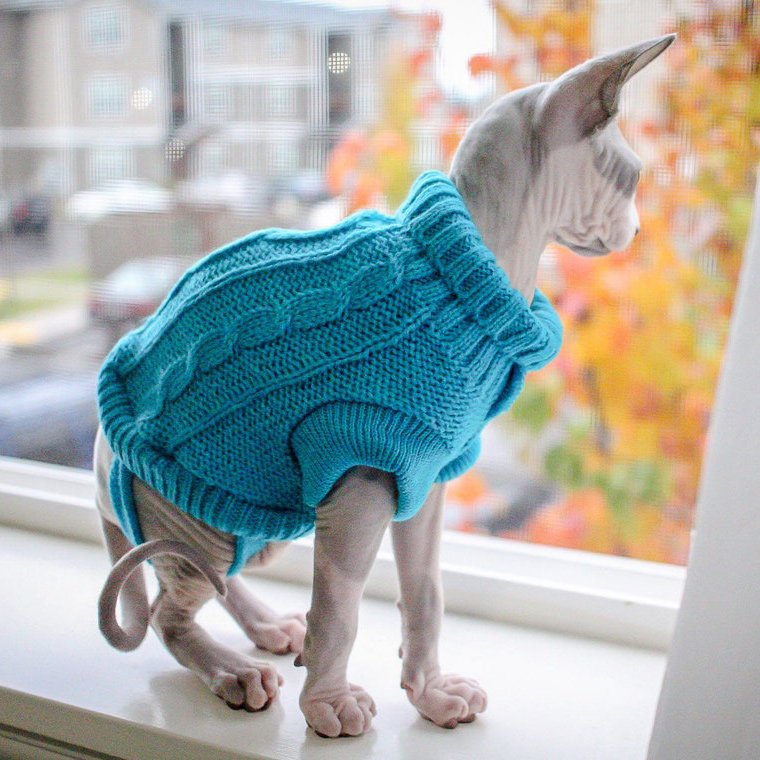 Sphynx cat wearing a Tiny Kitten Sweaters for Sphynx Cats sitting on a window sill