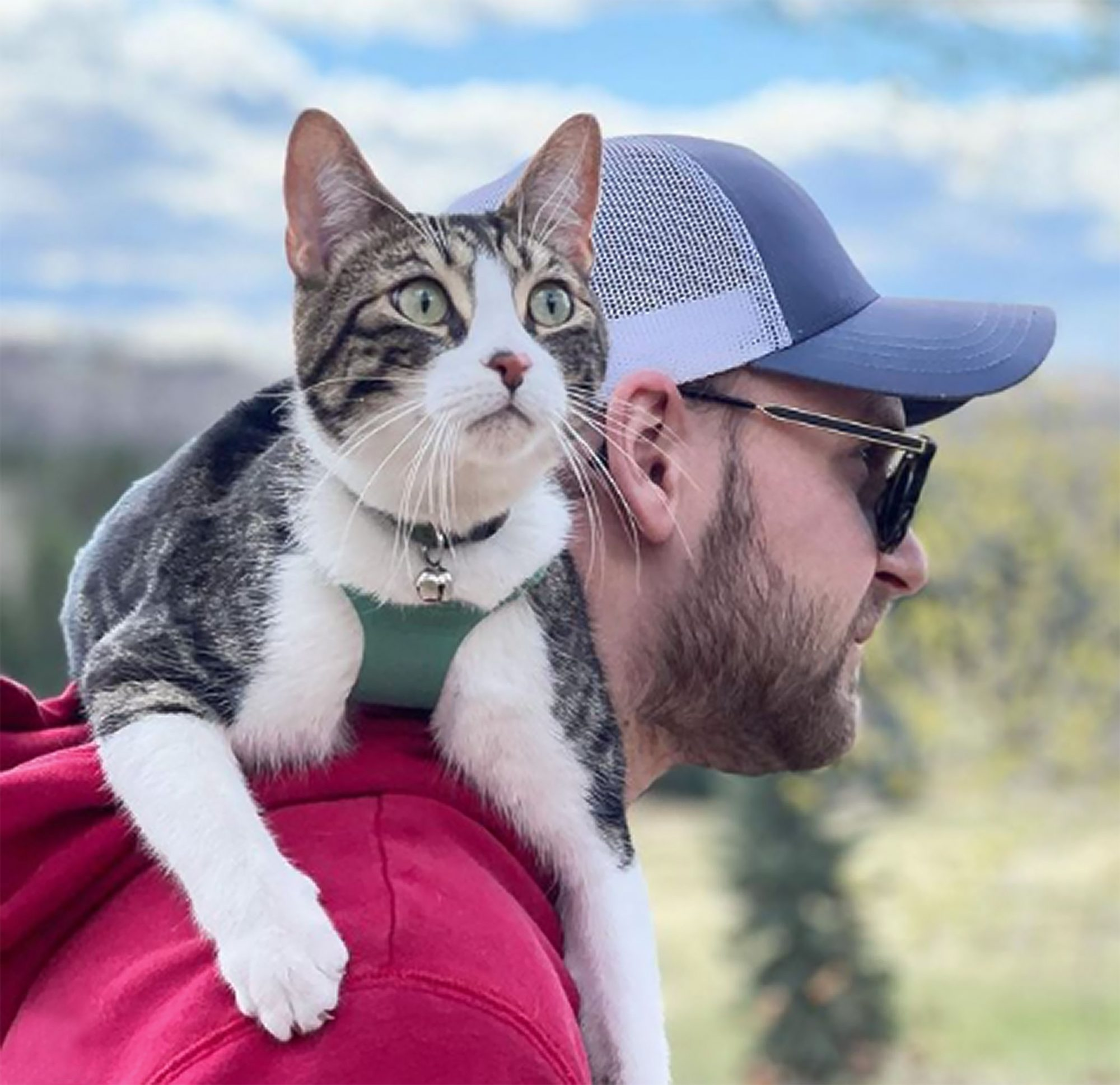 cat in harness on shoulders of man before slipping his harness