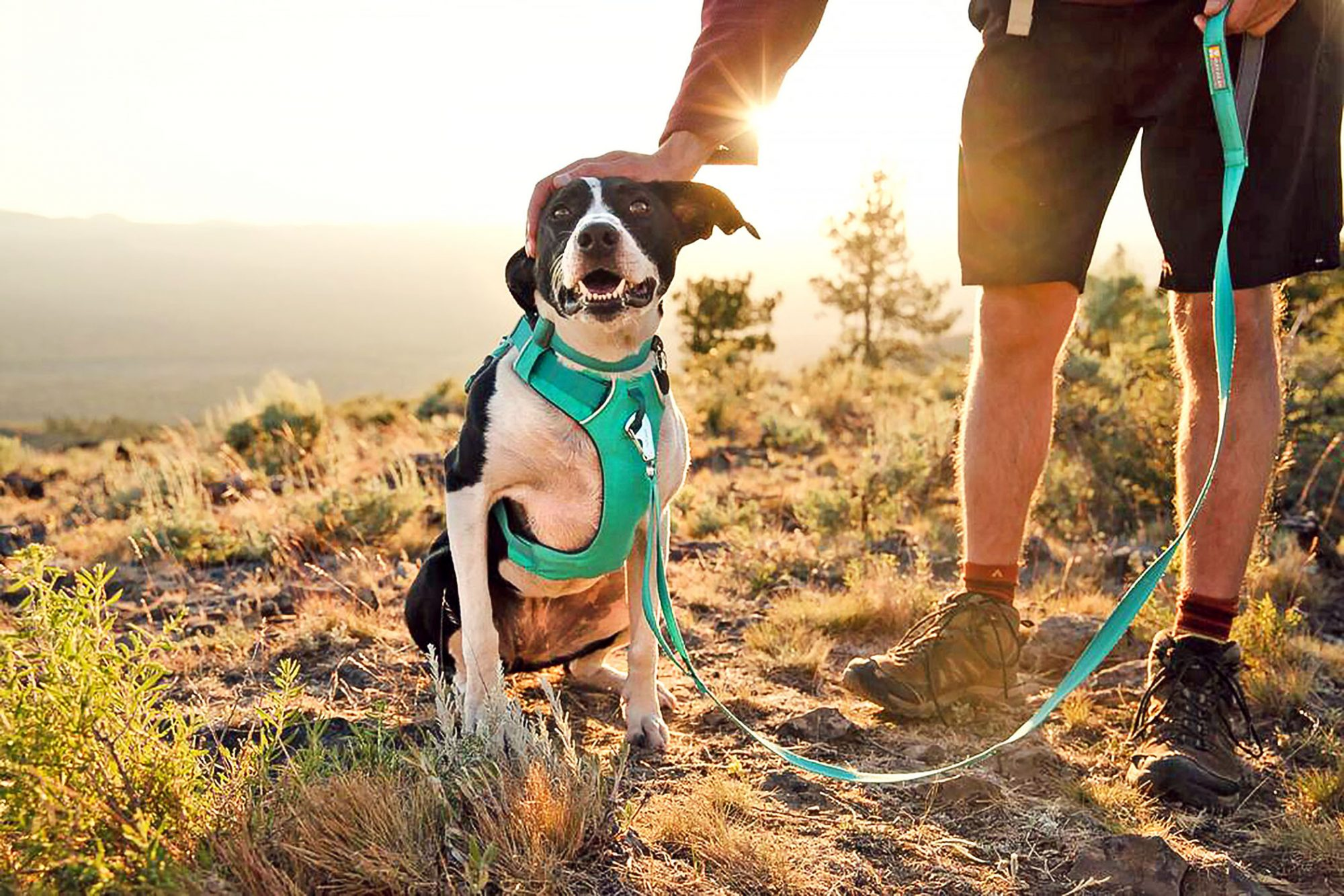dog-wearing-harness-gift-for-new-dog-owner