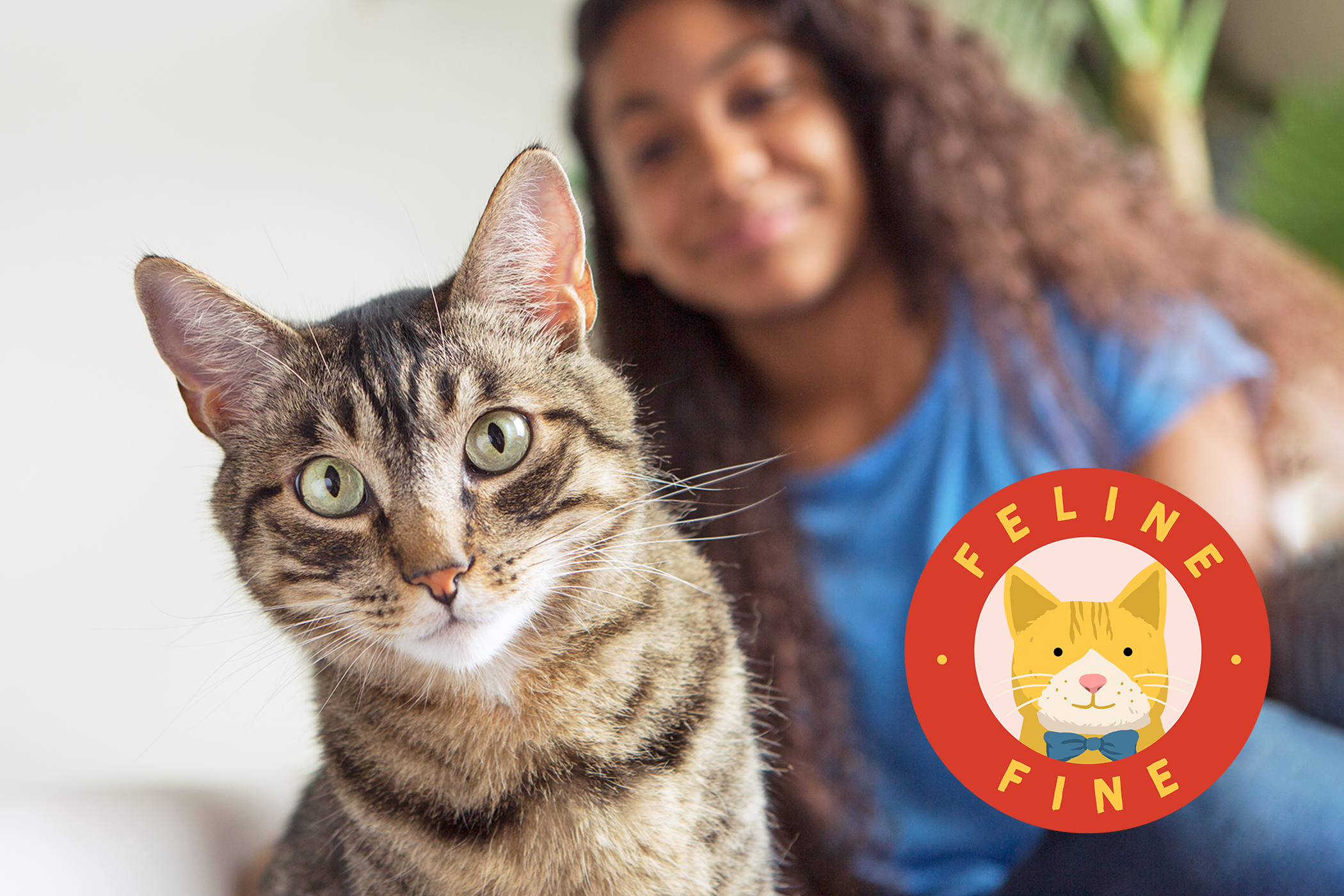 photo of a cat with anxiety sitting next to her owner with a feline fine logo in the corner