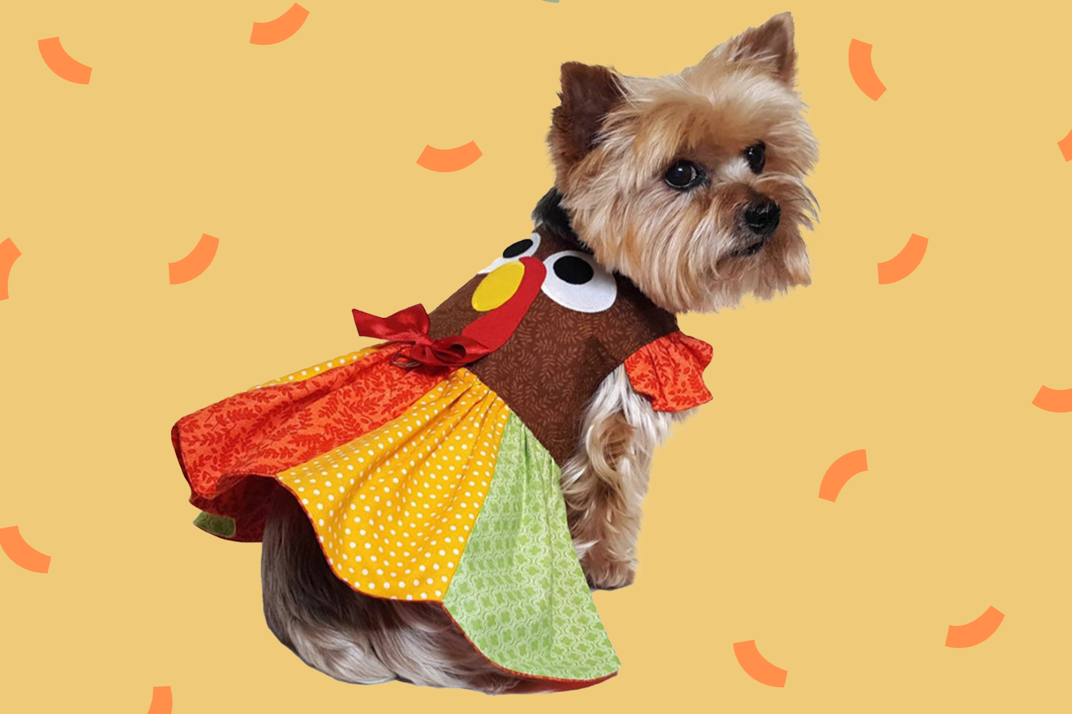 yorkie wearing a cute thanksgiving outfit on a yellow background