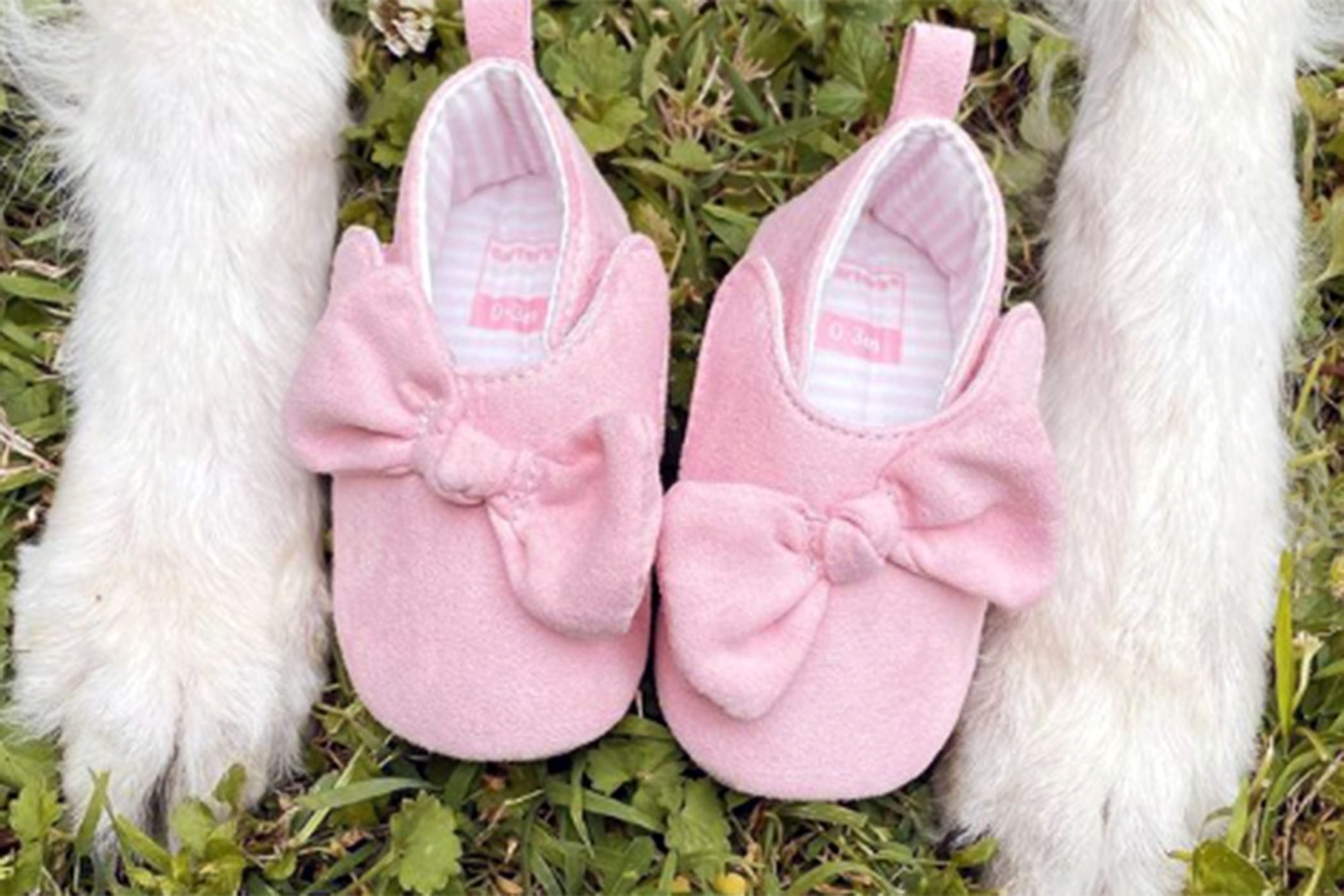 pink baby booties and paws image for a pregnancy announcement